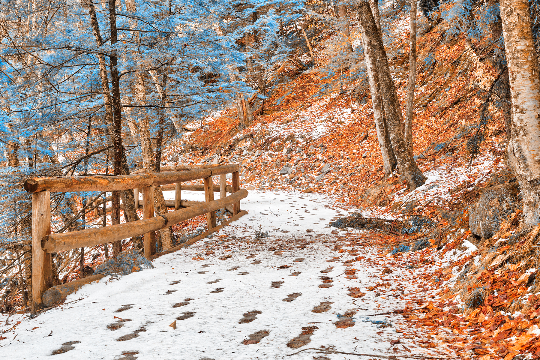 Sabbaday winter forest trail - amber sapphire fantasy hdr photo