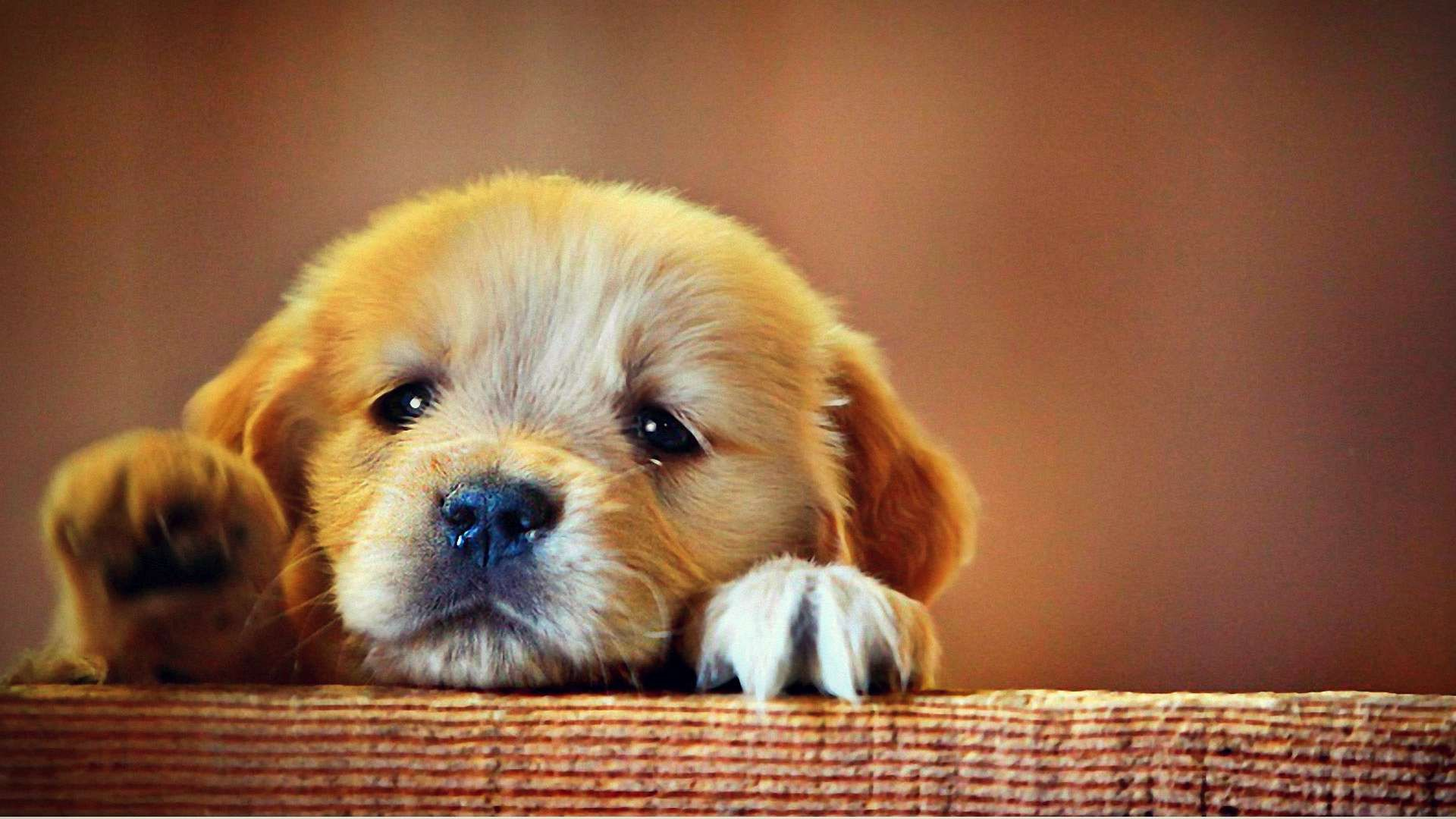 Sad Puppy | This is for all the moms out there that love their dog ...