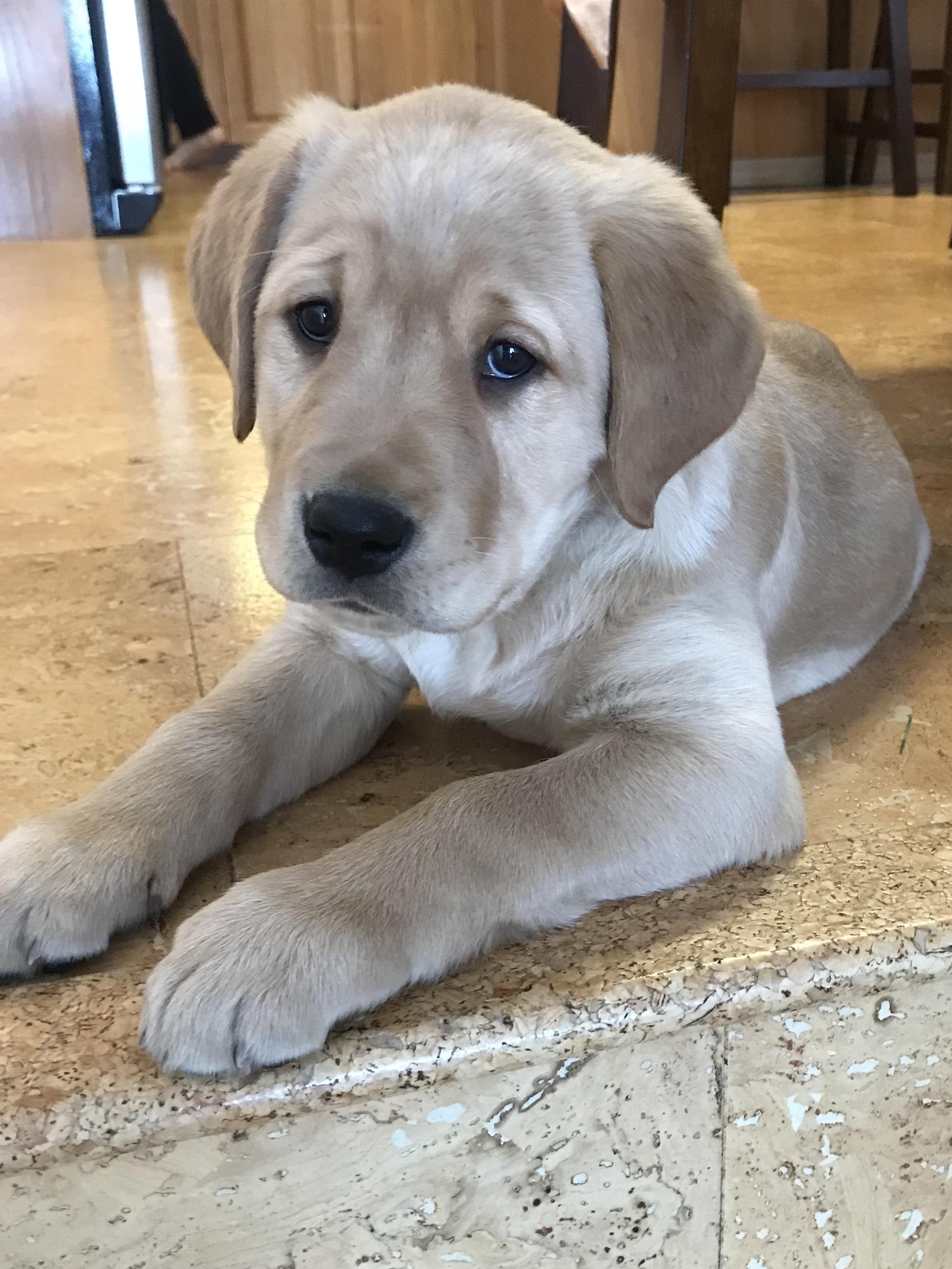 Eternally sad puppy - Album on Imgur