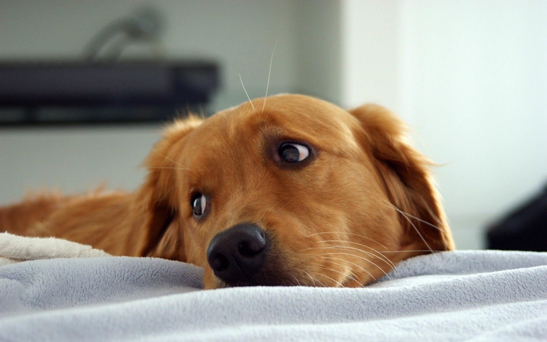 Sad Puppy #6937789