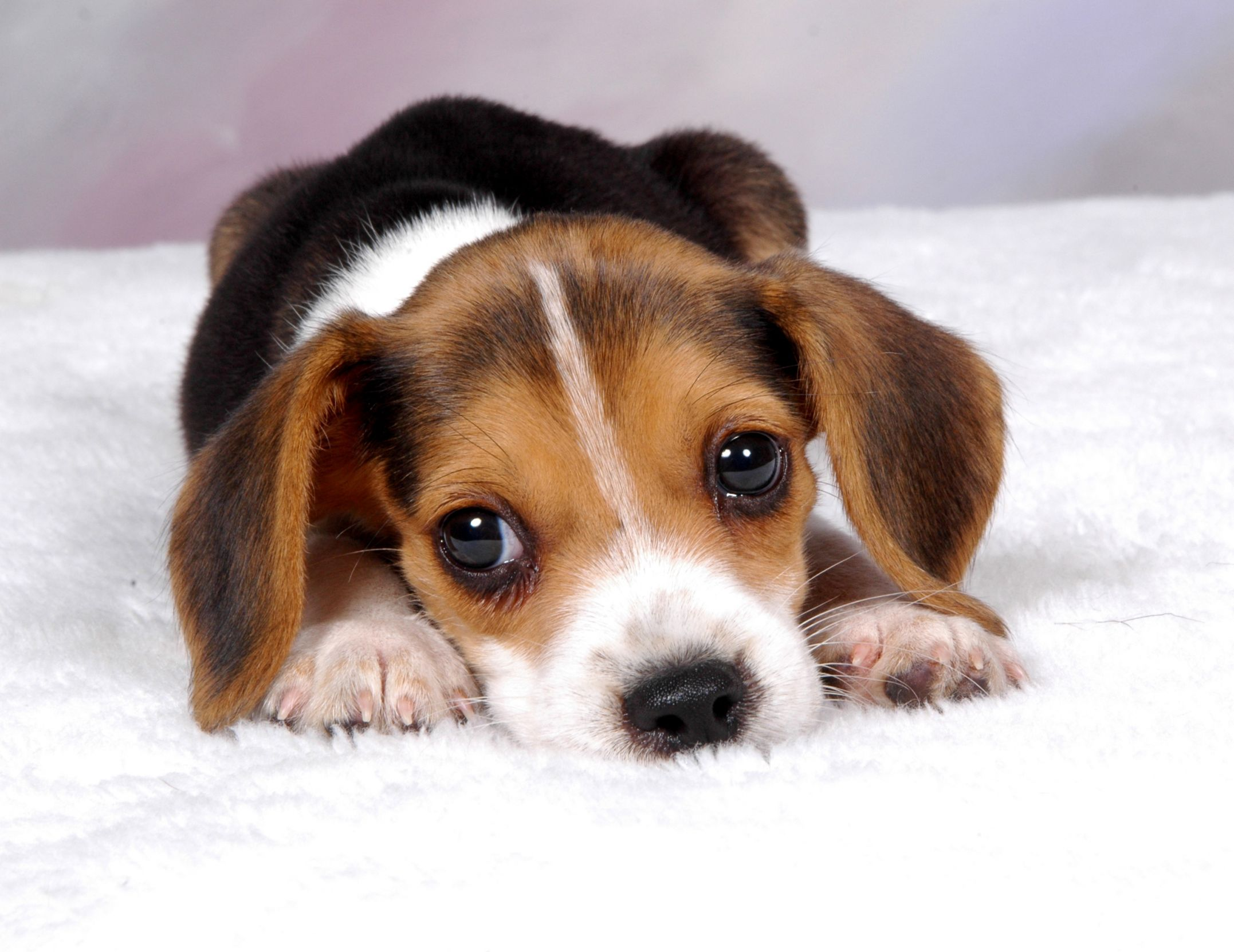 Sad puppy Blank Template - Imgflip