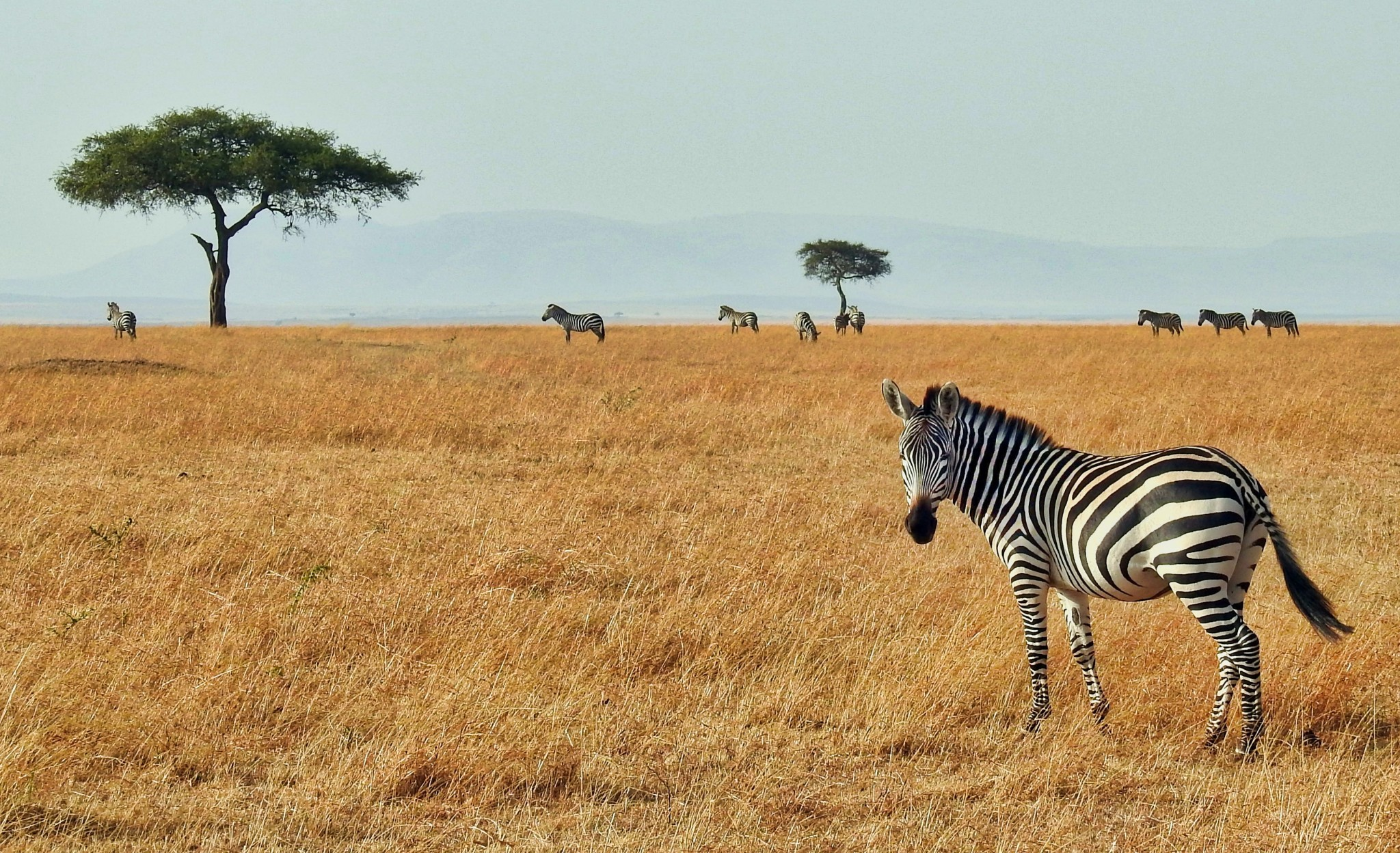 Should I go on safari in East or southern Africa? - African Portfolio