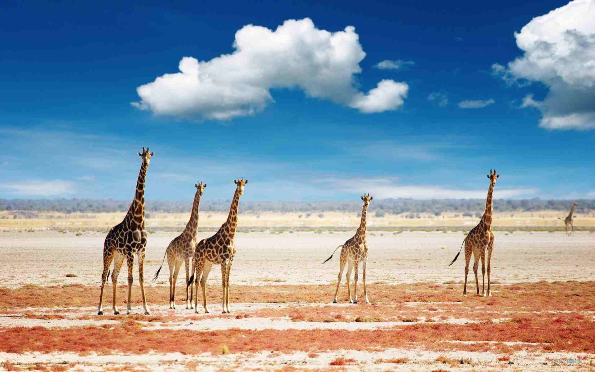 Tanzania Safari Holidays | Packages & prices 2017 - 2018