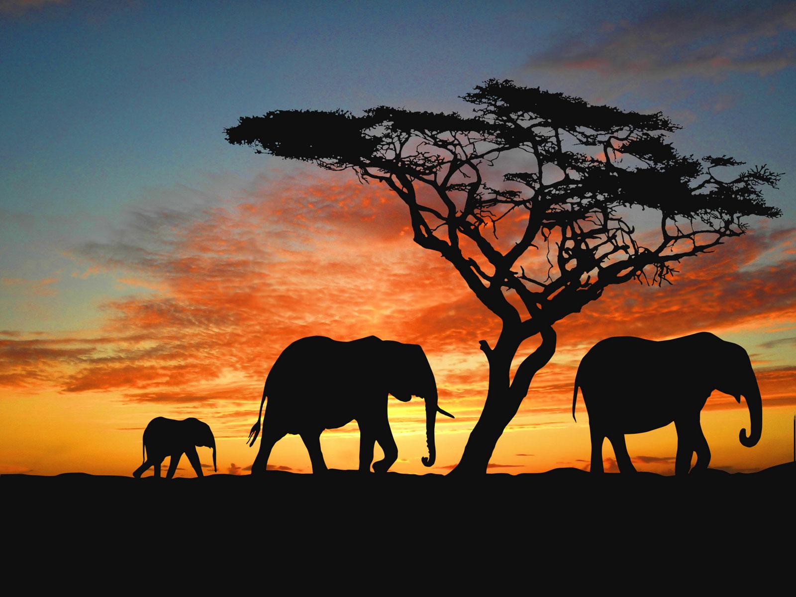 Elephant Voyage - Elephant Safari in Jaipur, India | Scenic Photos ...