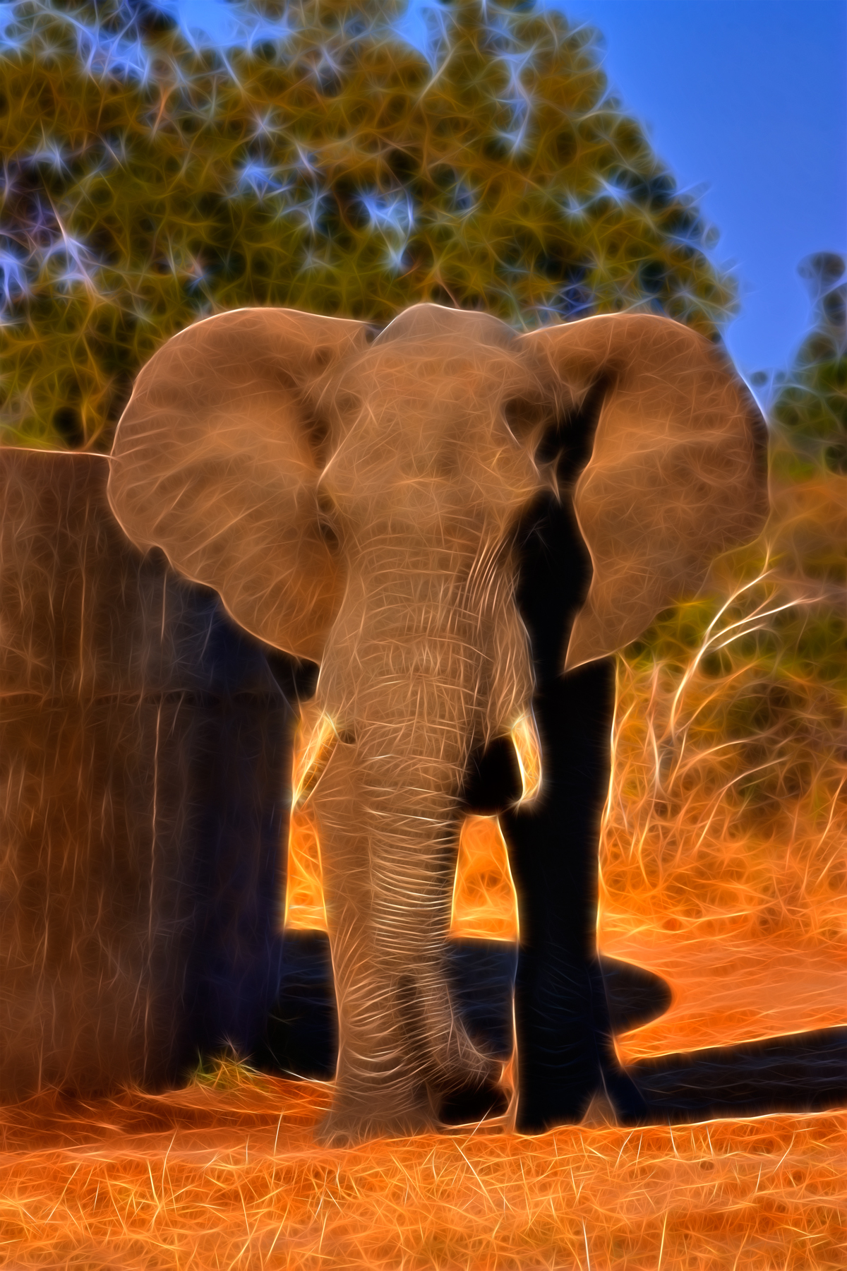 Safari Elephant Abstract, Resolution, Photomanipulatio, Picture, Pretty, HQ Photo