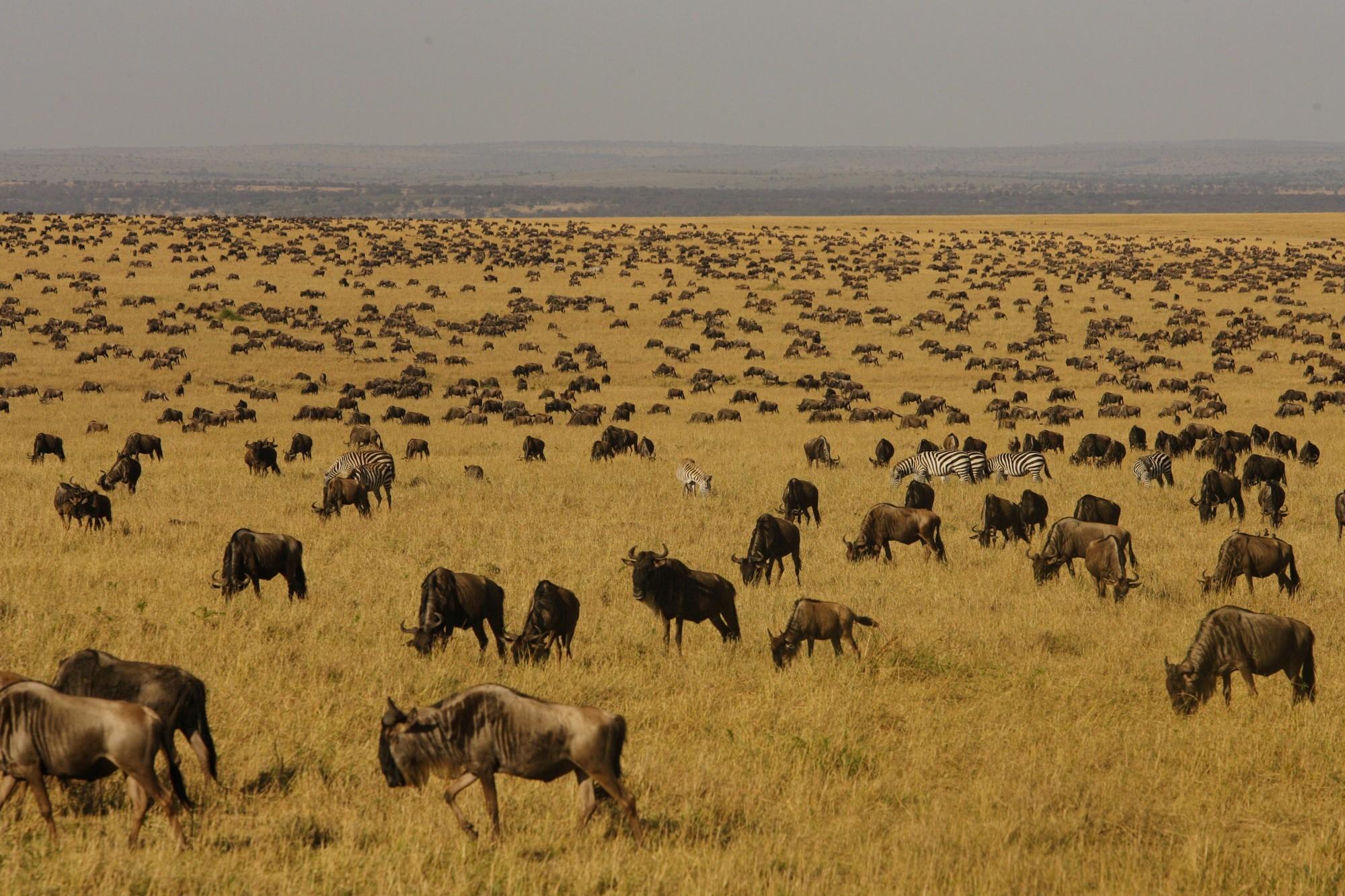 Great Migration Safaris   Safari365