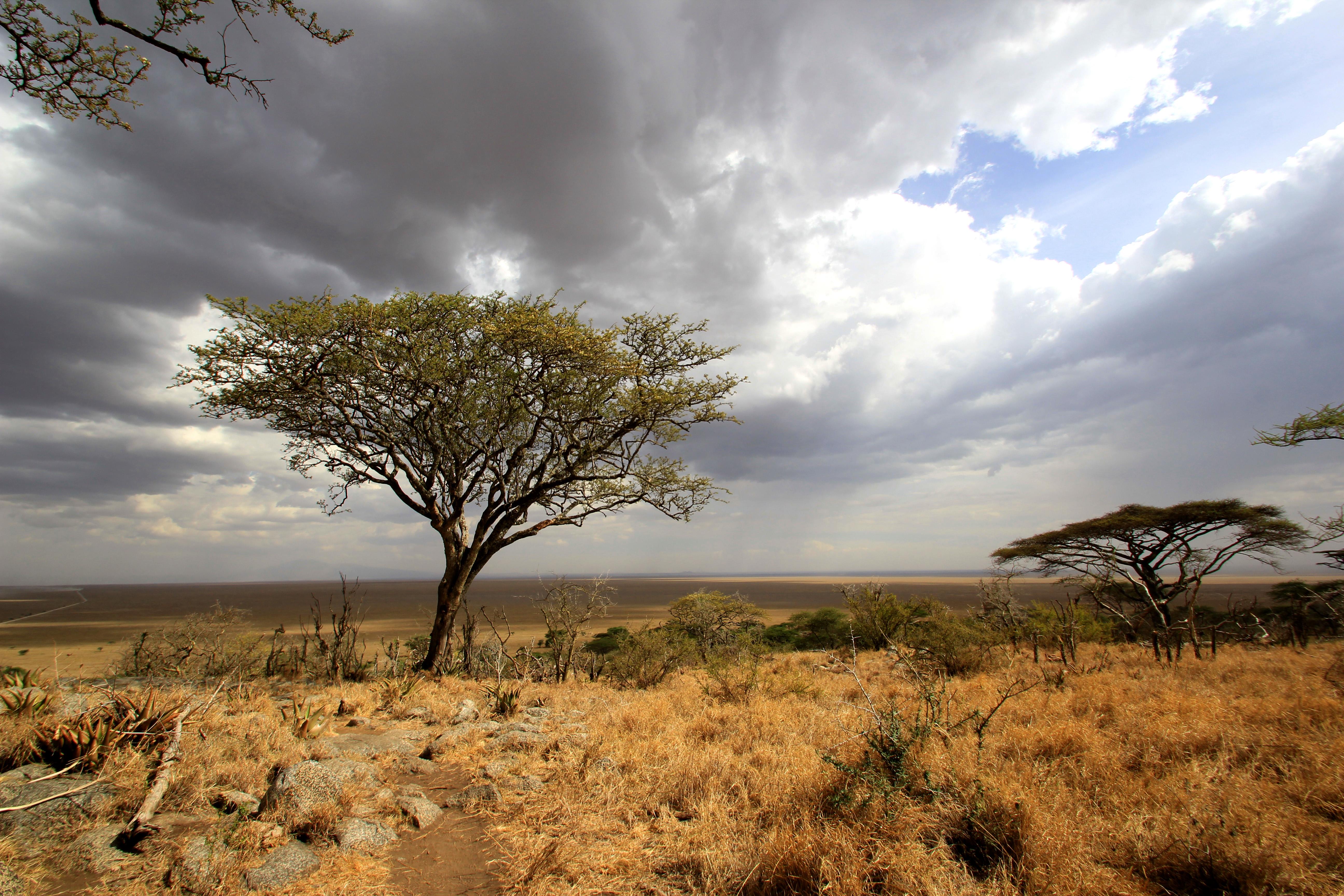 Safari: Part III – The endless plain: Serengeti   iago80