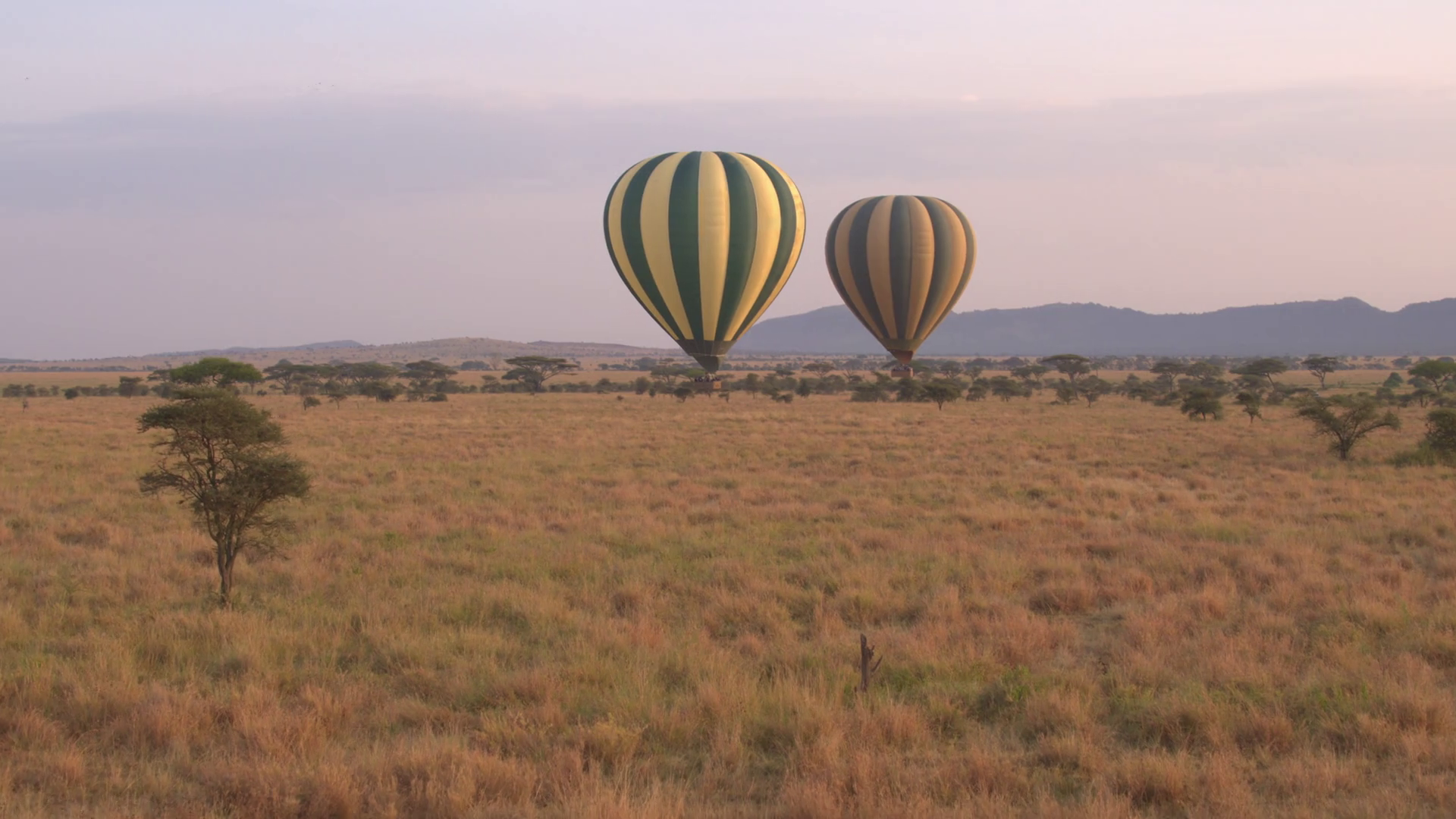 CLOSE UP: Two ballons safari flying above amazing short grass ...