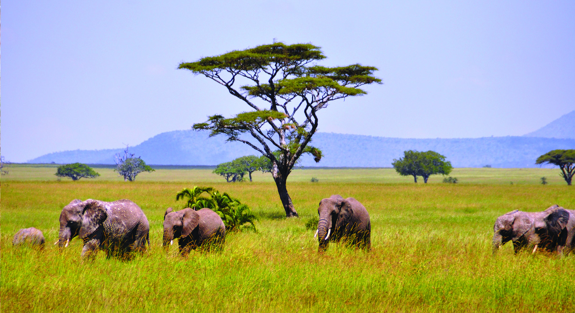 7 Days Cultural Safari (Lake Manyara / Eyasi / Serengeti Plains ...