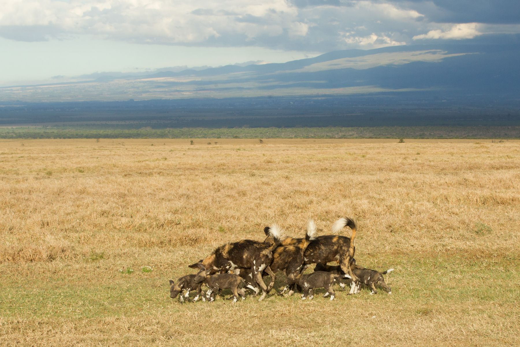 Kenya Photography Tours - Masai Mara - Wildlife Photography Holidays