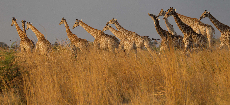 Selinda Camp, Botswana – October 2011 News « Great Plains ...