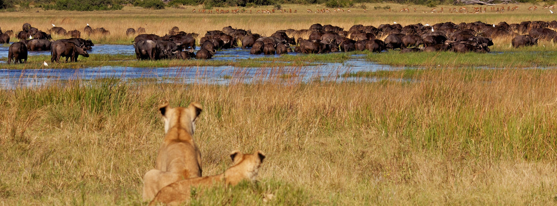Index of /assets/images/1280x475/southern-africa/botswana/duba-plains