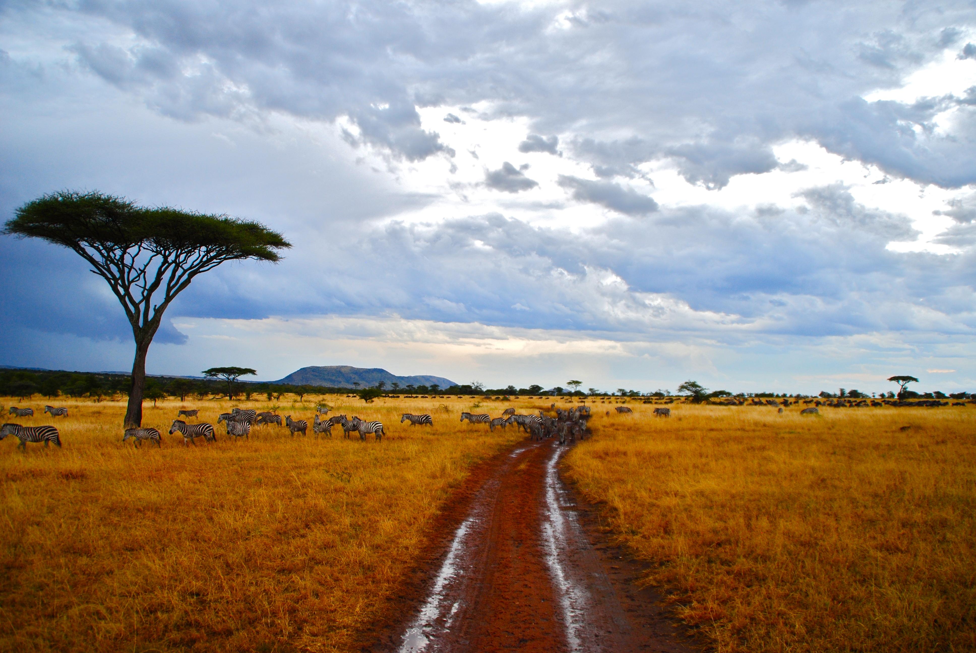 Adventure in Africa ~ part 1 Safari February 2012 | tranquility safari