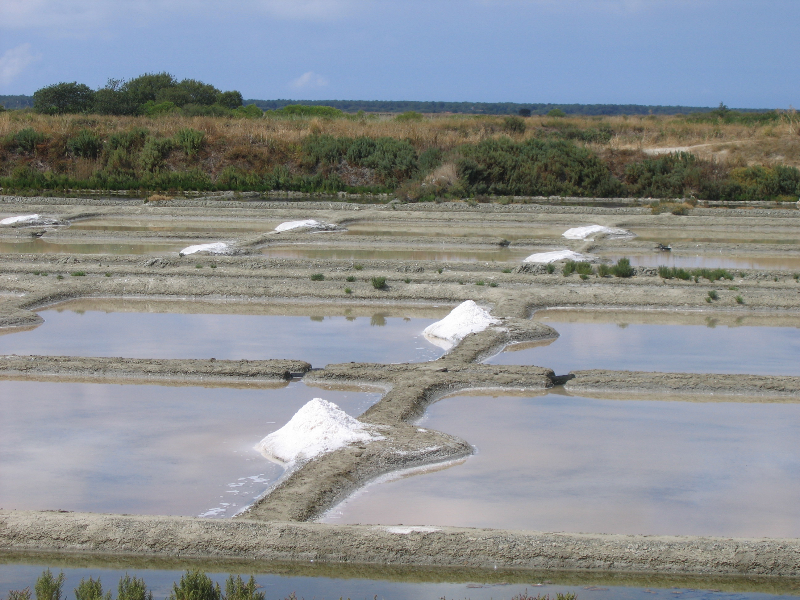 Salt Marsh, Salt, Sea, Nature, View, HQ Photo