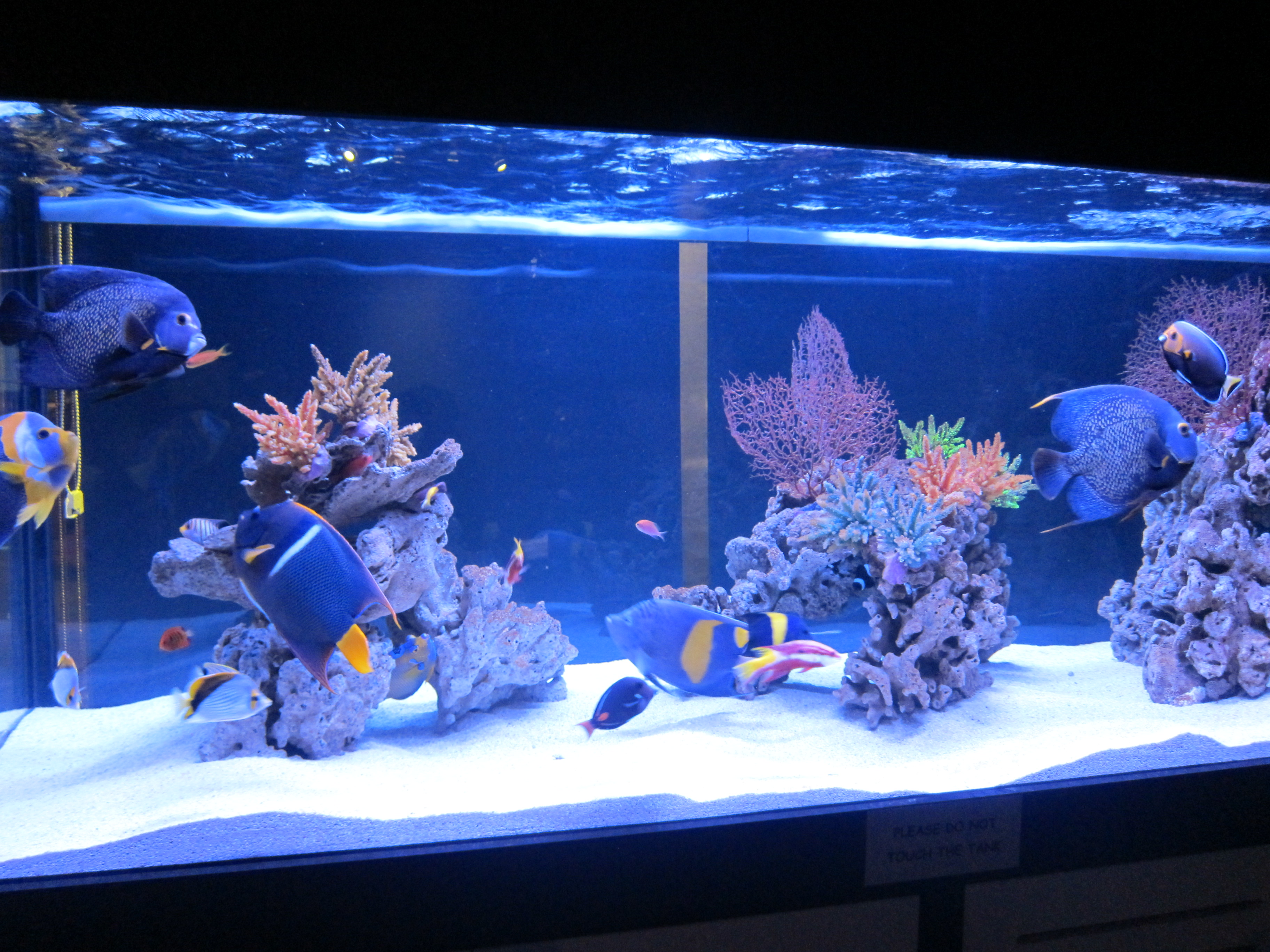 Types of Saltwater Aquariums - The Aquarium Setup, Filtration, and ...