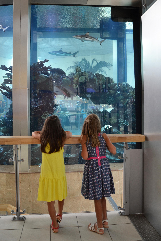 Saltwater aquarium, Aquarium, Kids, Wonder, Water, HQ Photo