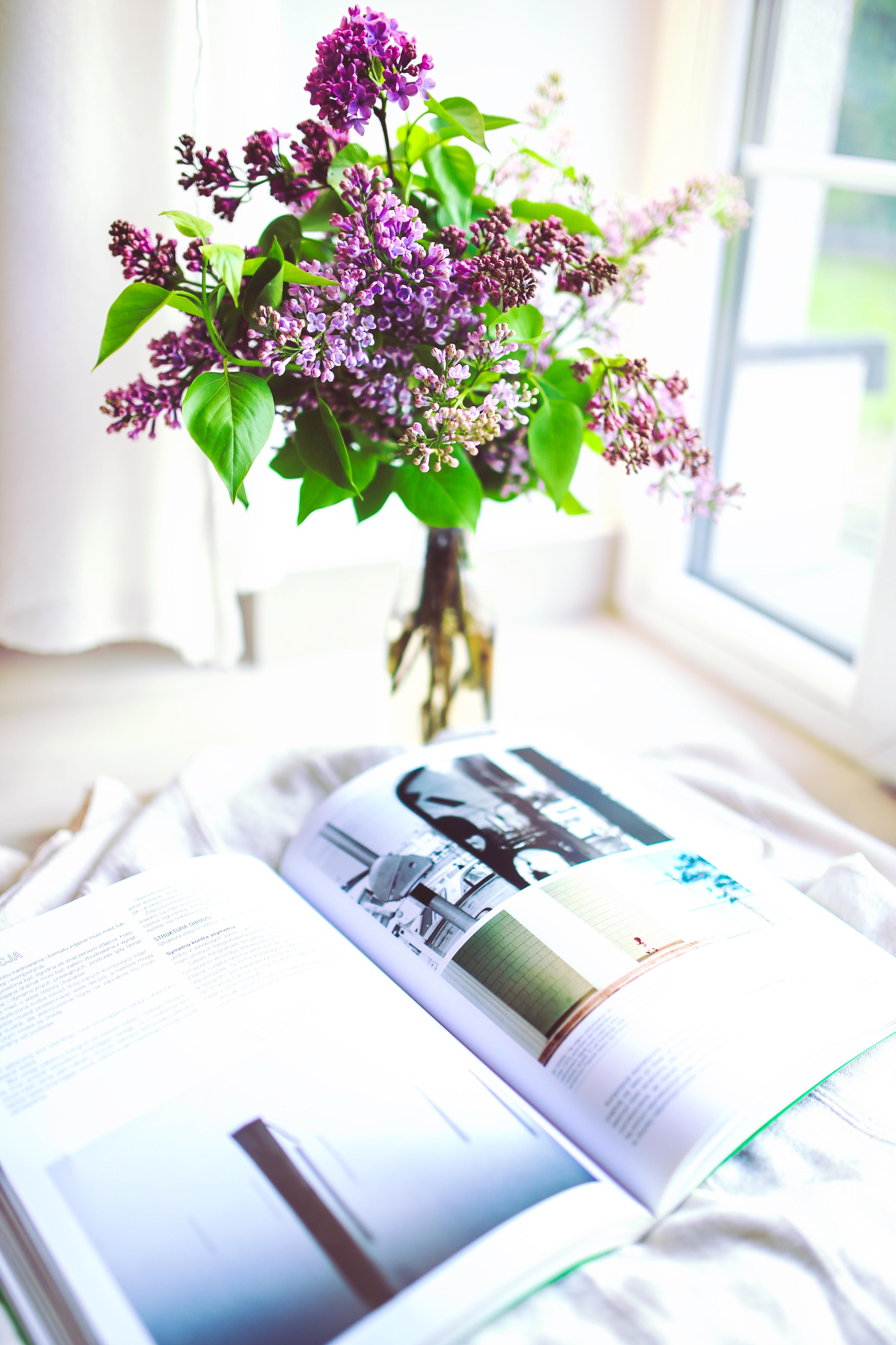 Sambucus / elder / elderberry, Indoors, Violet, Vase, Tree, HQ Photo