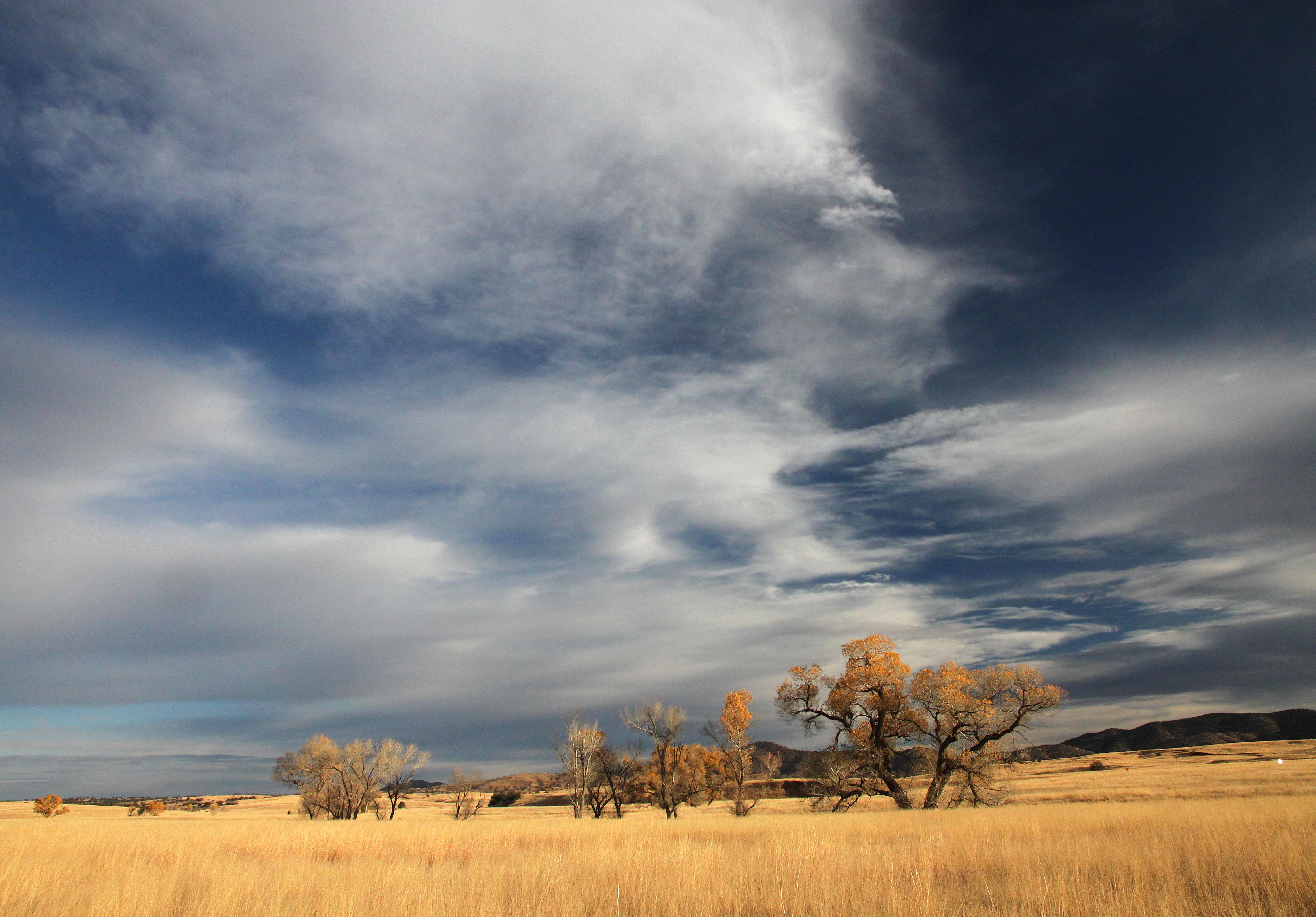 San rafael valley grasslands, se of patagonia, scc, az (11-24-11) -01 photo