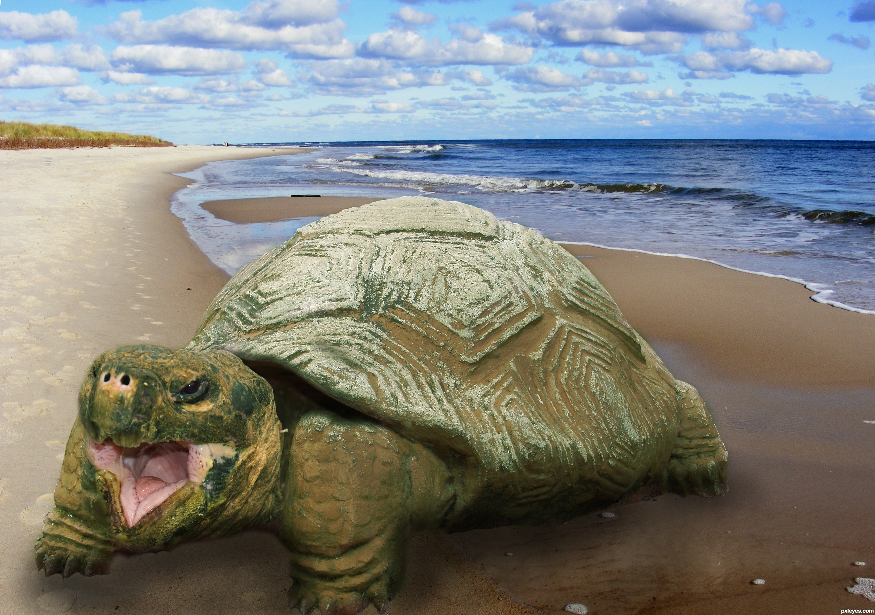 sandy turtle picture, by photoshopmum for: stone turtle photoshop ...