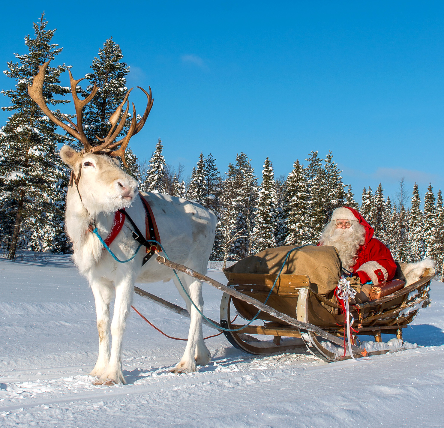 Santa Claus' reindeer sleigh ride at Ritavaara in Pello in Lapland ...