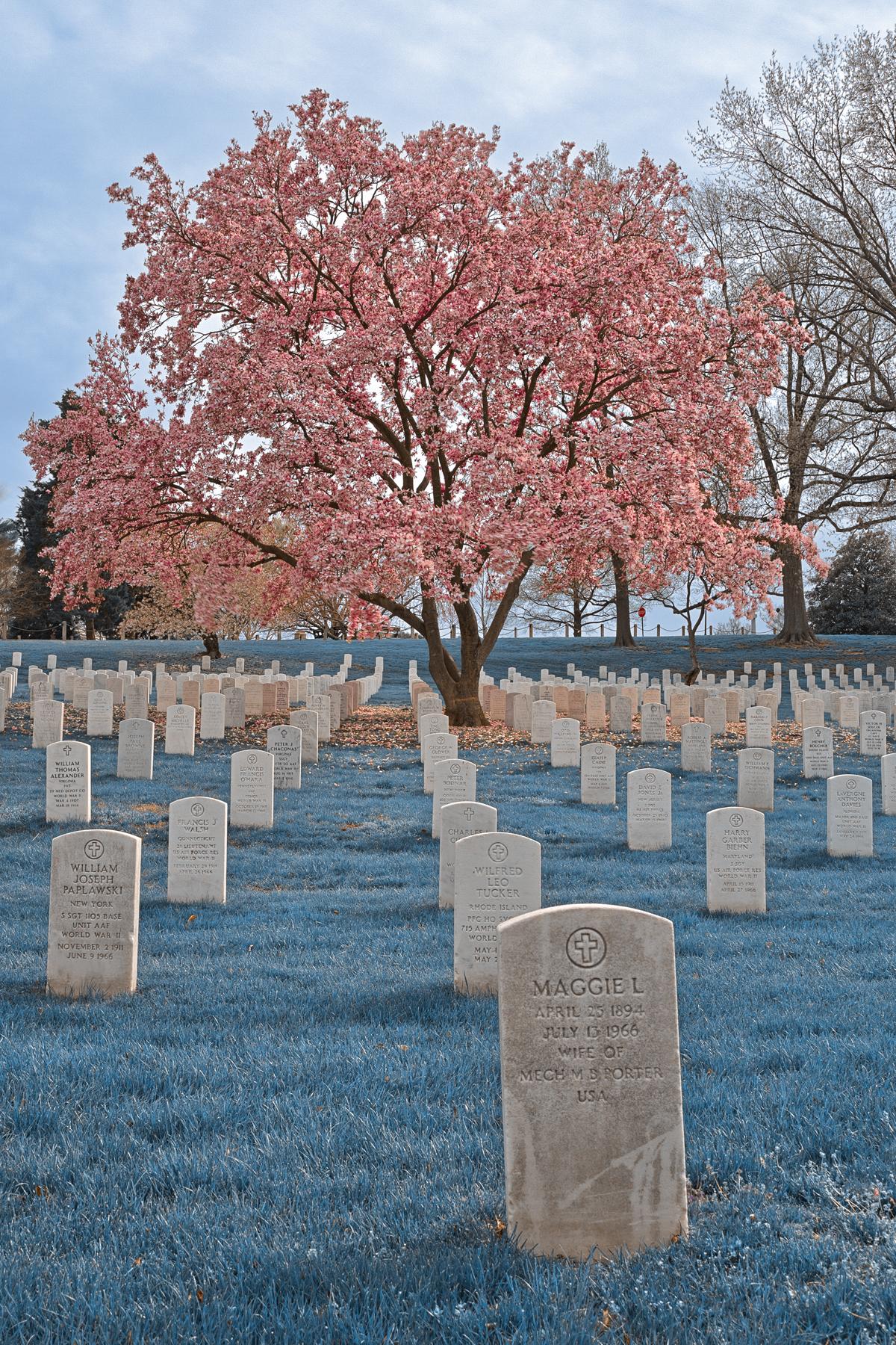 Sapphire Cherry Blossom Cemetery - HDR, America, Pretty, Scenery, Scene, HQ Photo