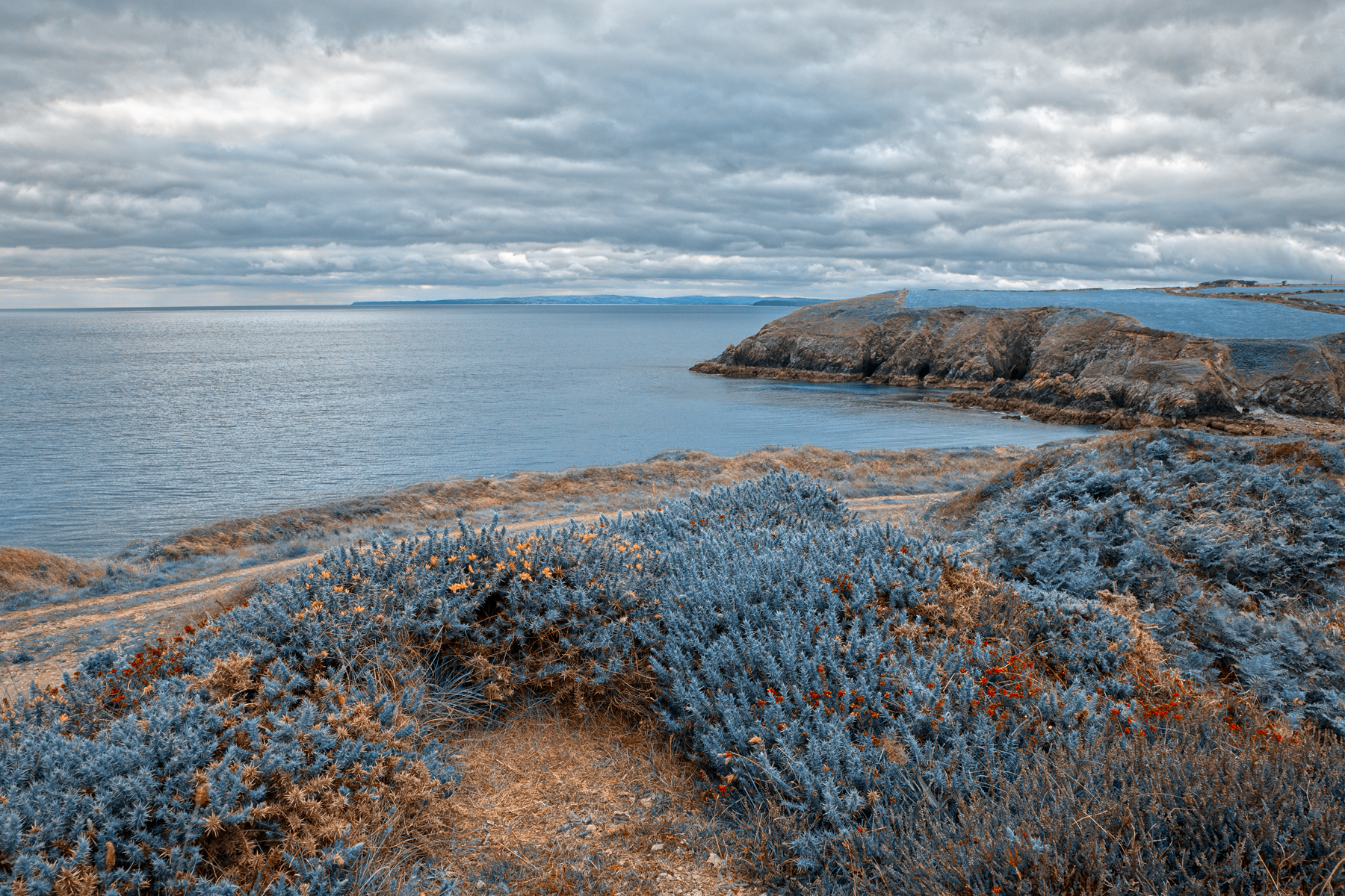 Sapphire Coast - HDR, Amber, Plants, Scenic, Scenery, HQ Photo
