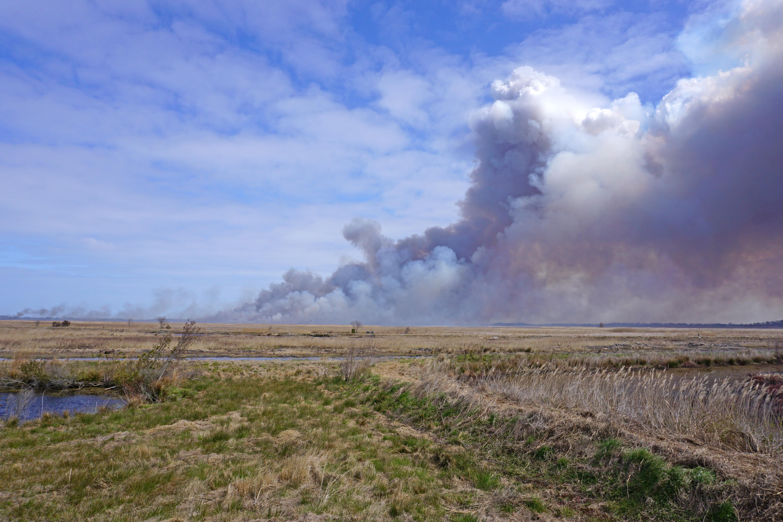 Scene prescribed fire mackay island nwr ncwetlands kg (8) photo