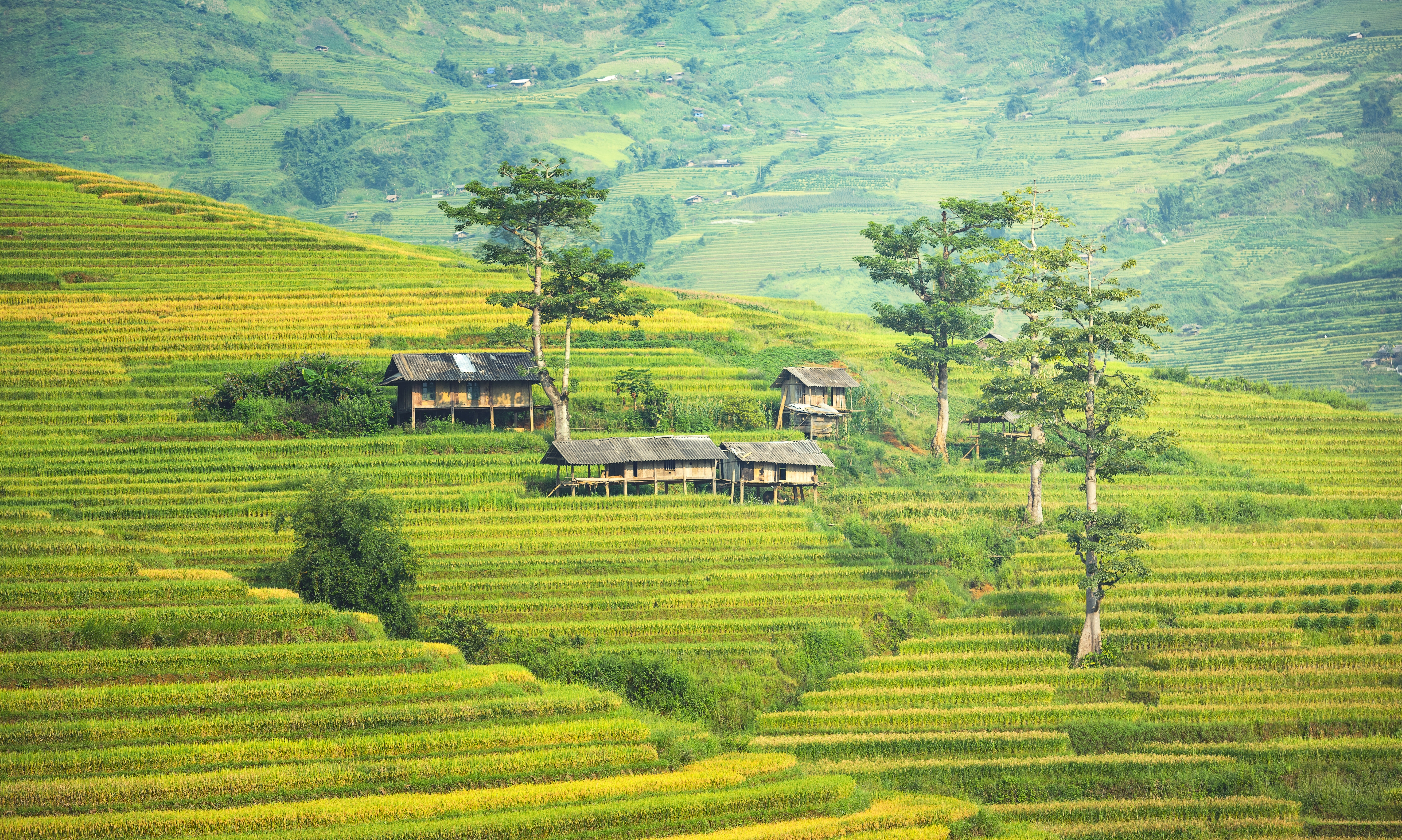Scenic view of agricultural field photo