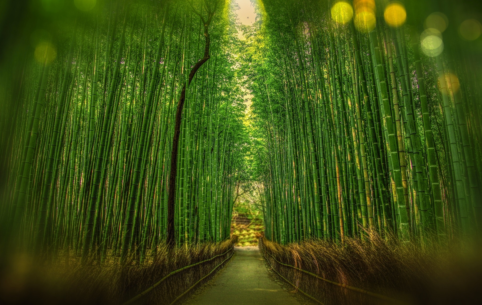 Scenic view of bamboo trees photo