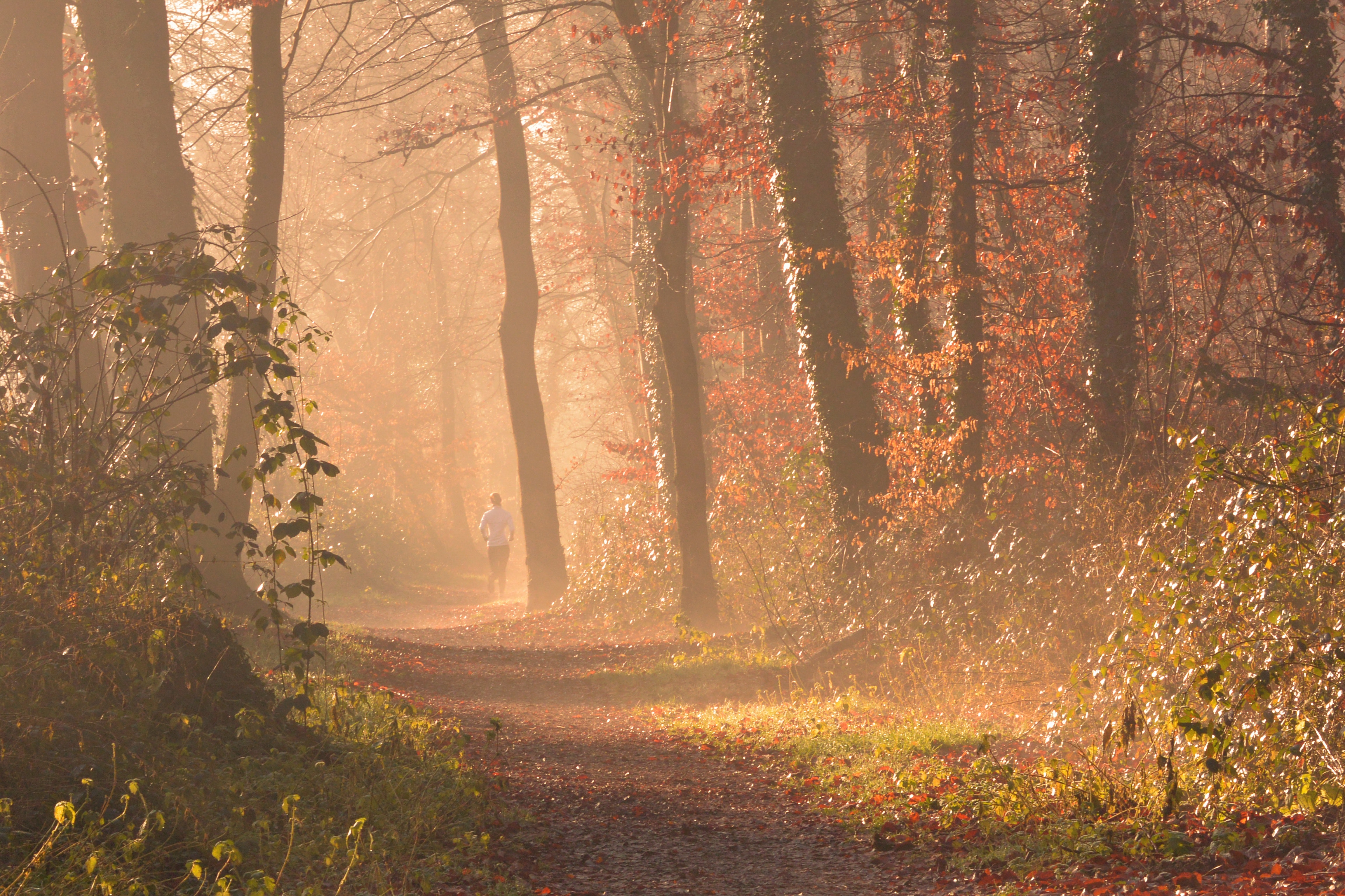 Scenic View of Forest, Autumn, Mist, Trees, Sunlight, HQ Photo
