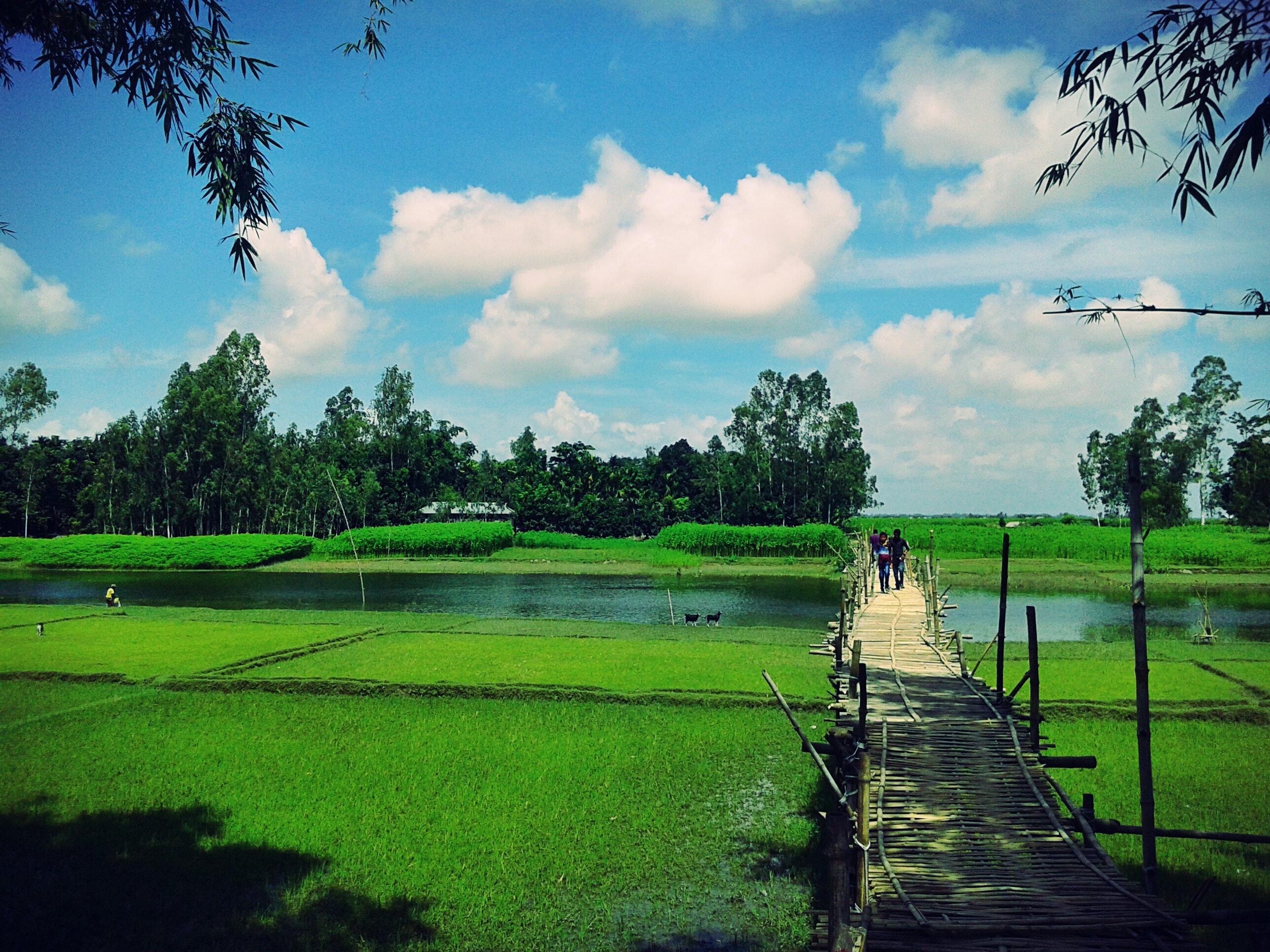 Scenic view of the farm photo