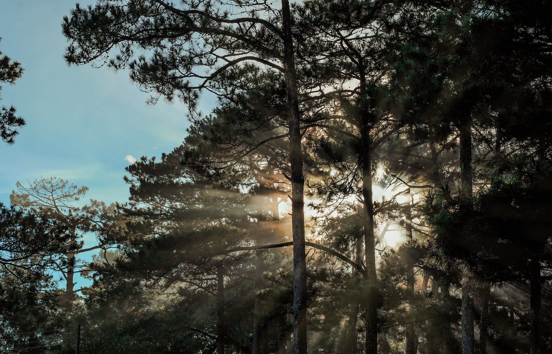 Scenic view of trees during sunrise photo