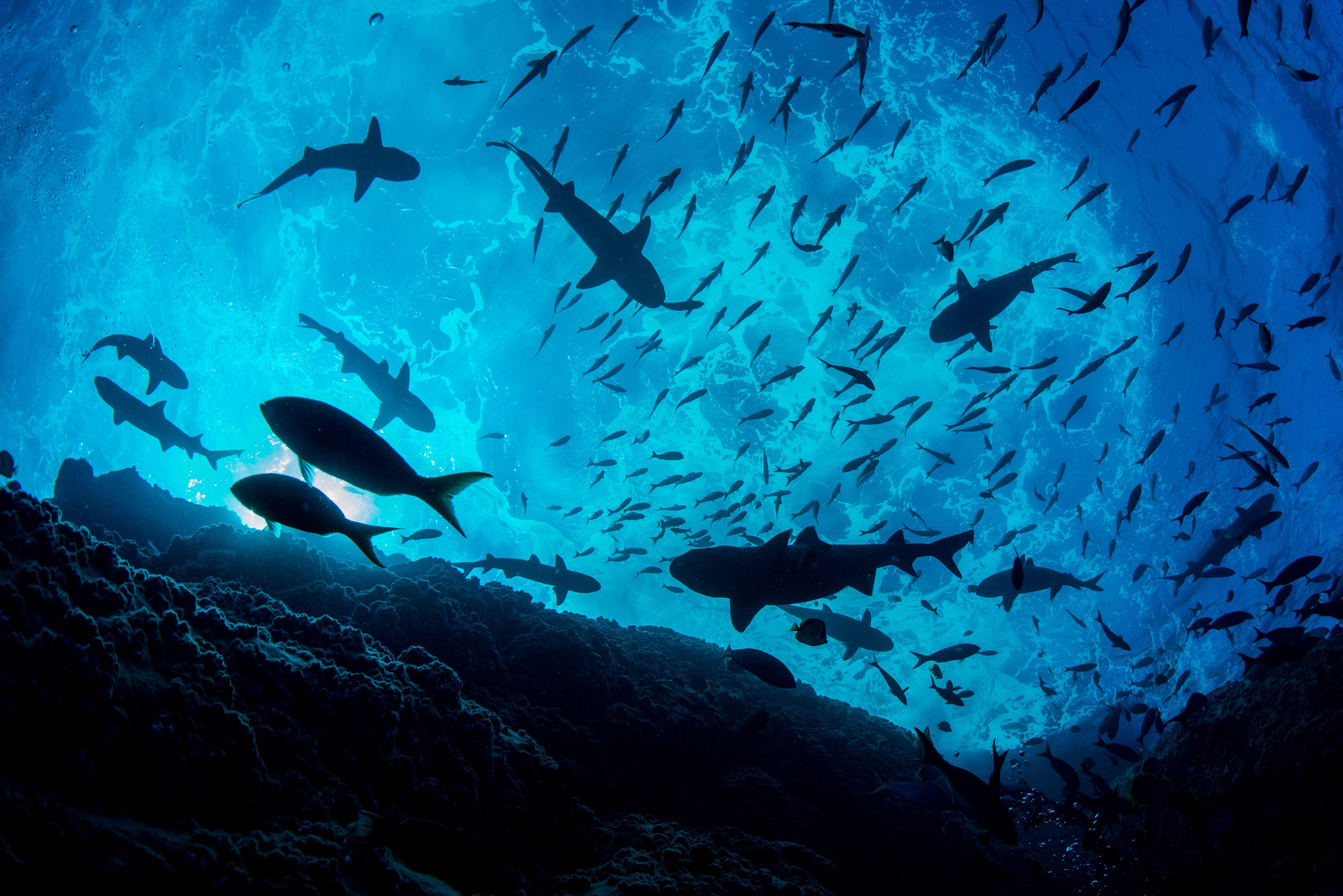 Pristine Seas - National Geographic Society
