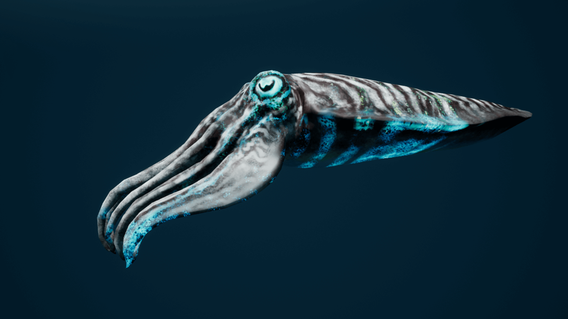 Sea Creature Pack by Jasper Cousins in Characters - UE4 Marketplace