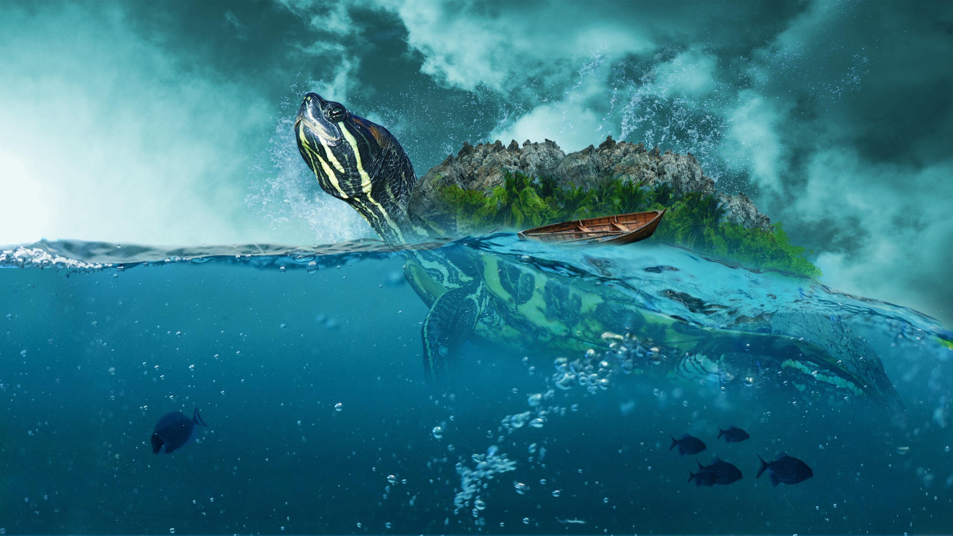 Sea Creature, Ocean, Sea, Water, Nature, HQ Photo