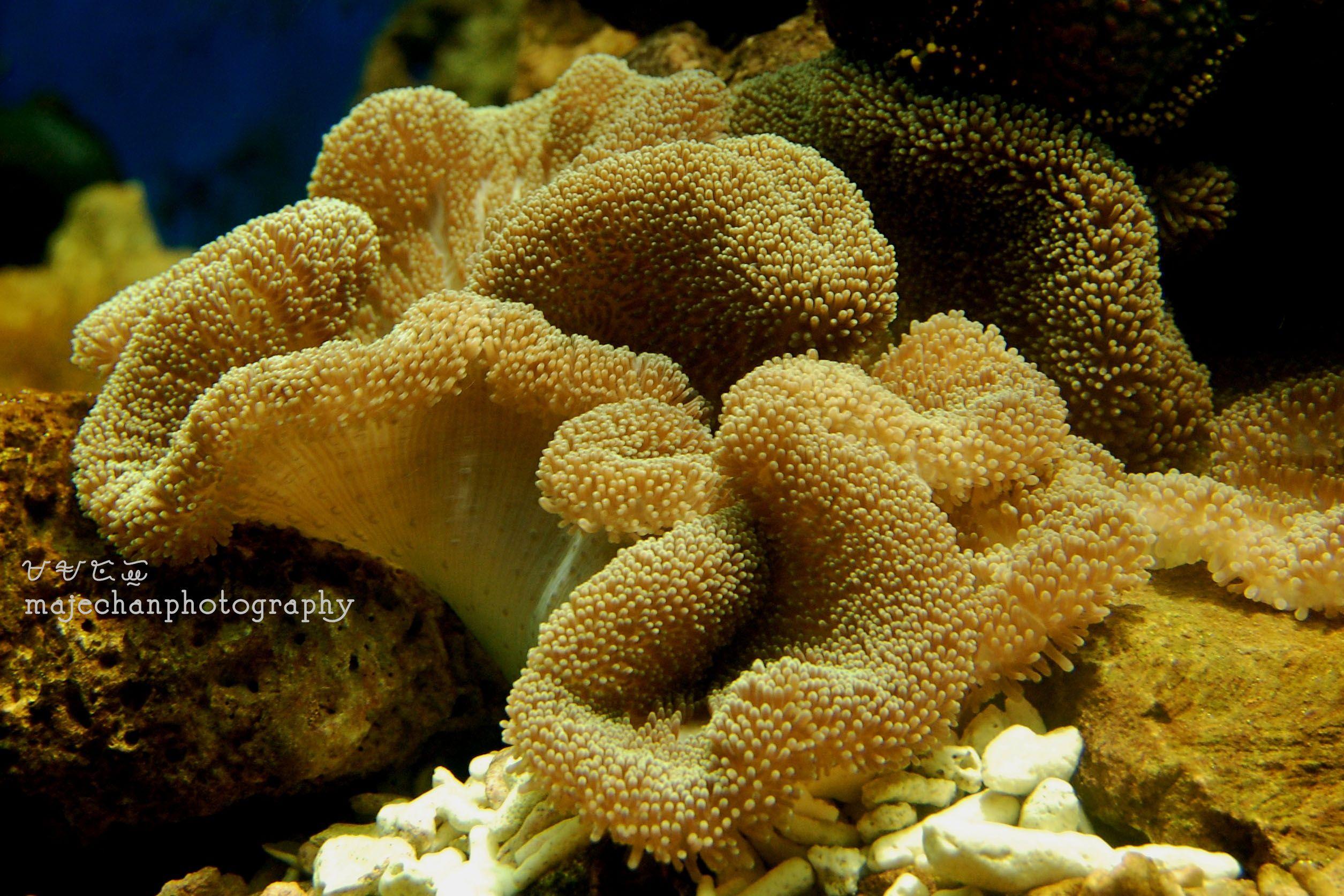 23-11-15 -photomajegraphy.deviantart.com sea plant - Google Search ...
