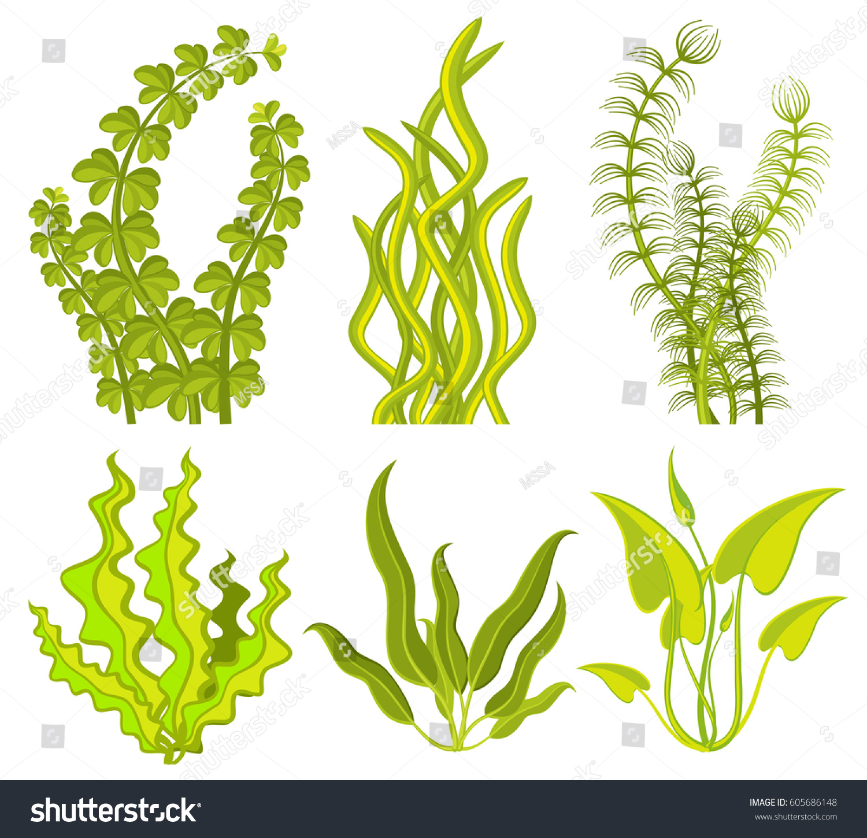 Underwater Seaweed Vector Elements Sea Plant Stock Vector (2018 ...
