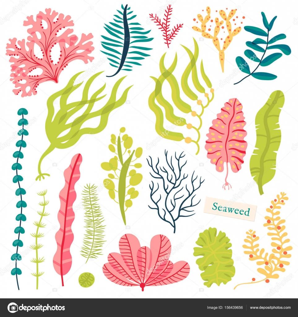 Sea plants and aquatic marine algae. Seaweed set vector illustration ...