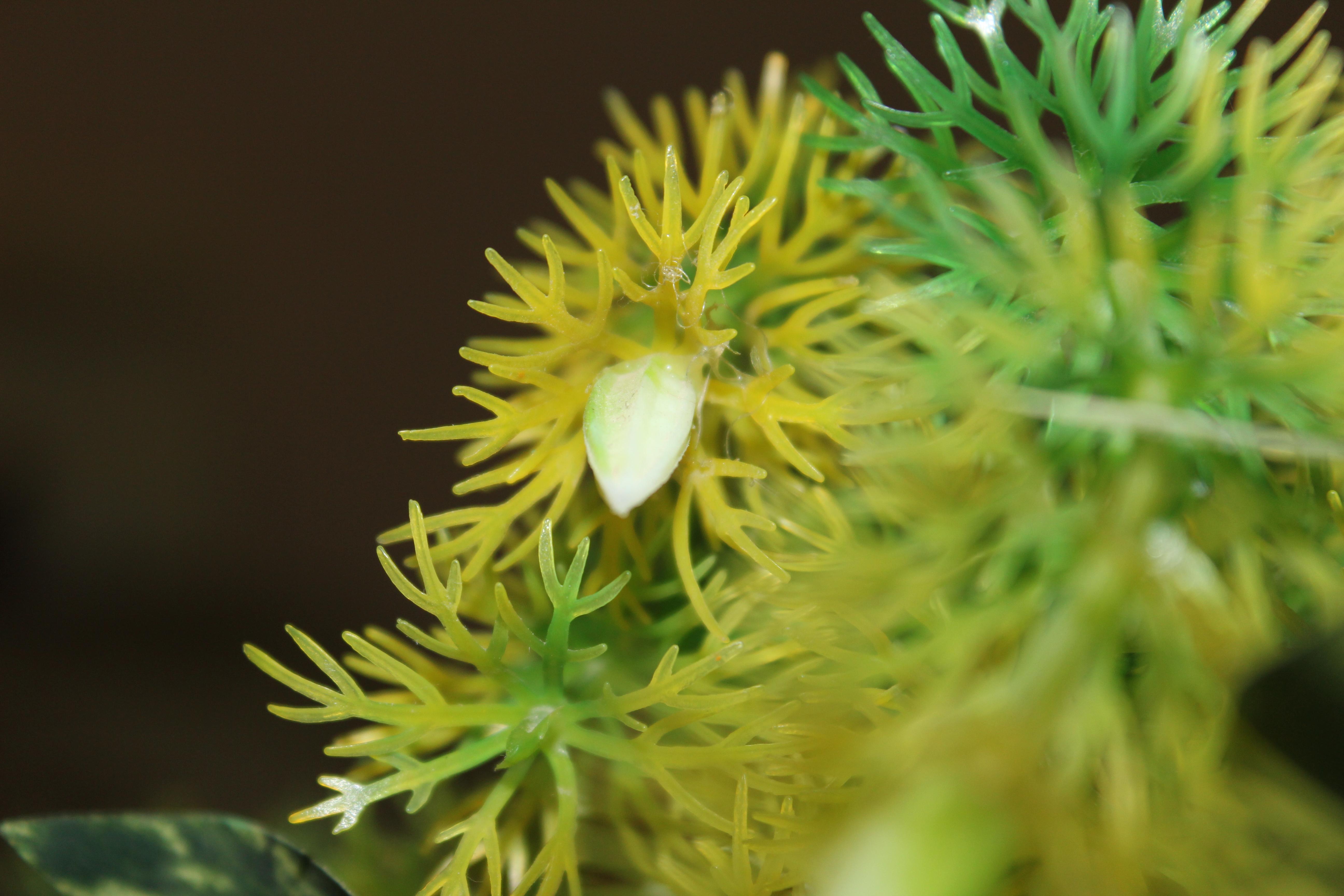 Sea plant, Green, Plant, Sea, HQ Photo