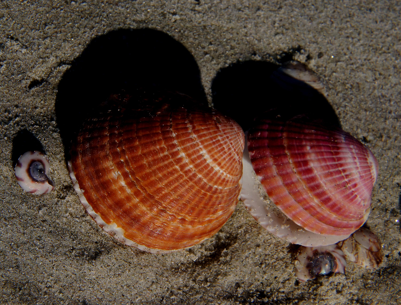 Sea shells (14) photo