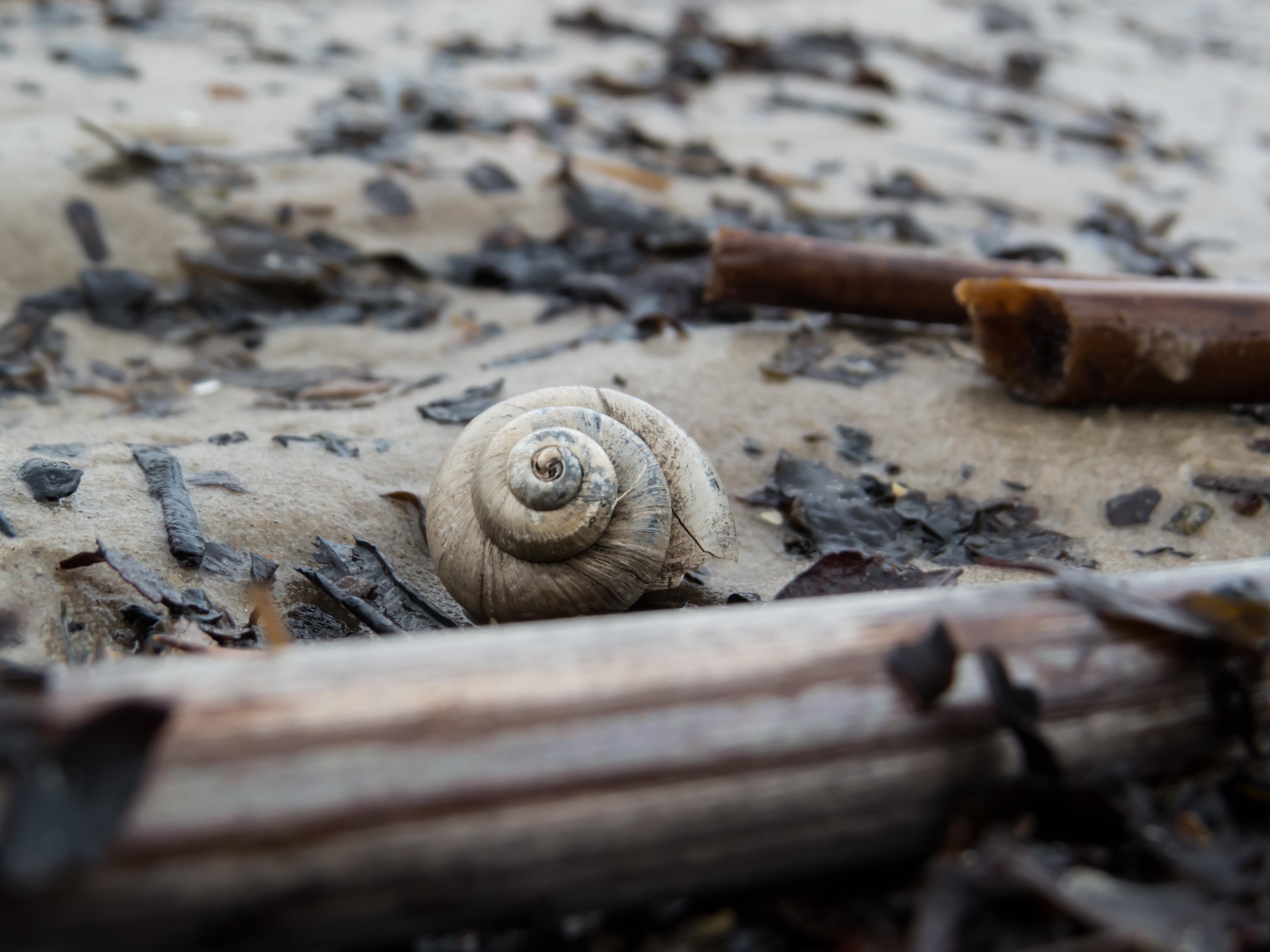 Sea snail photo
