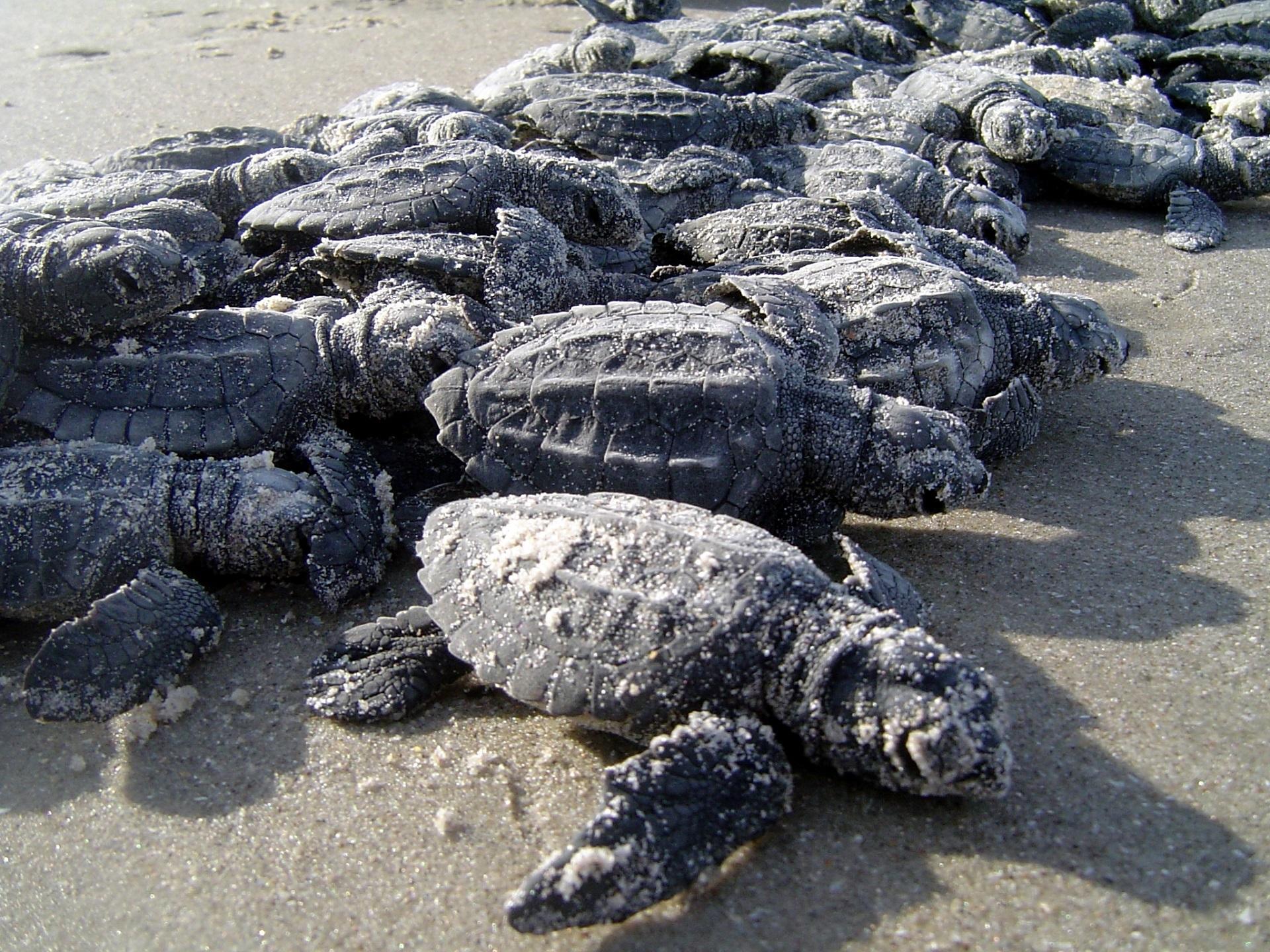 Sea turtles photo