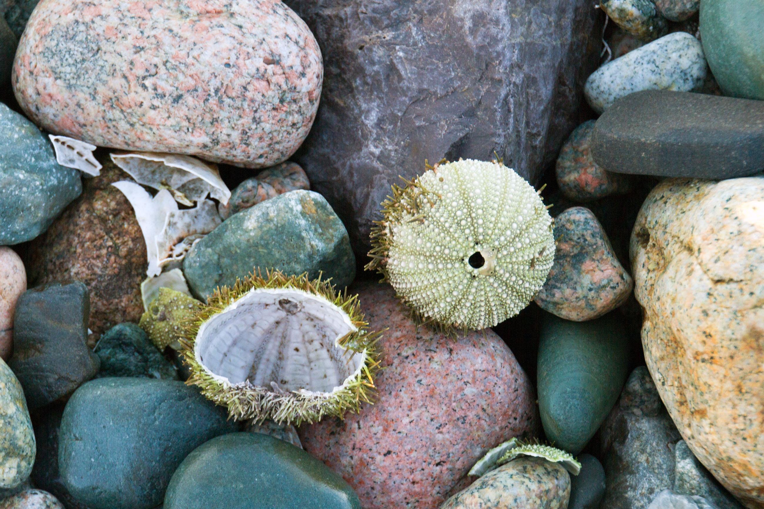 Sea urchin photo