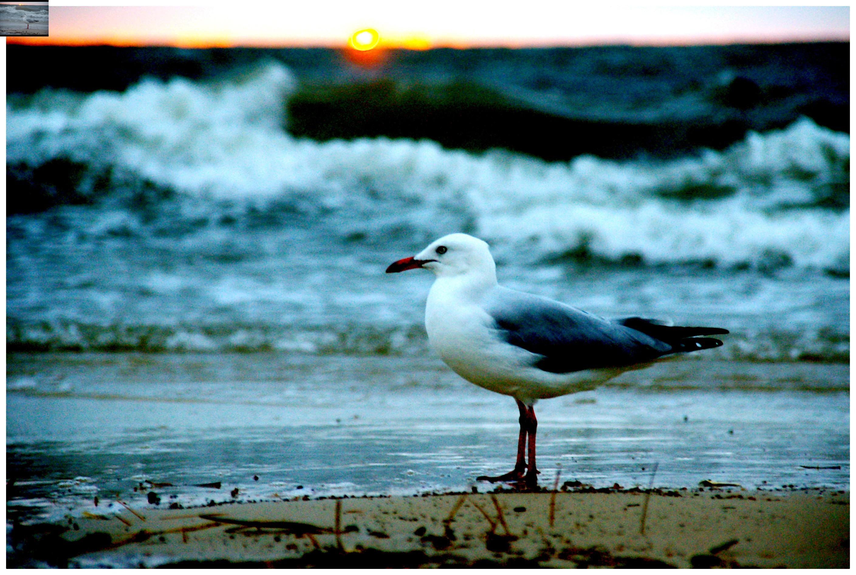 Seagull, Animal, Beach, Bird, Blue, HQ Photo