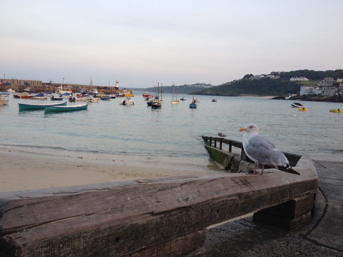 Seagull, Bird, Boats, Gull, Harbour, HQ Photo