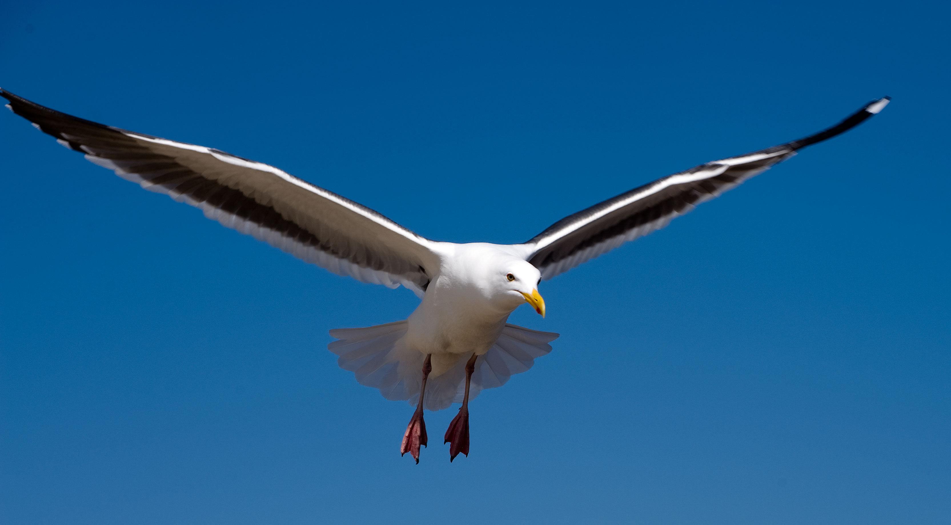 Confessions of a Startup Seagull at andrewchen