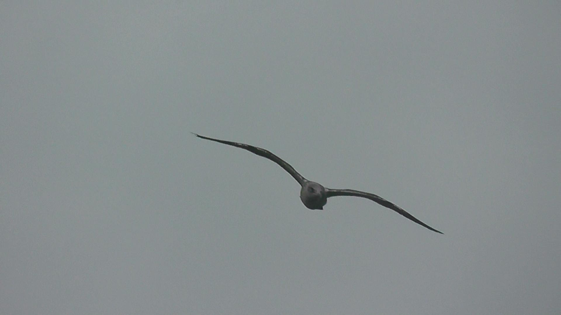 Incredible Bird Flying In The Sky - Seagull 00677 - YouTube
