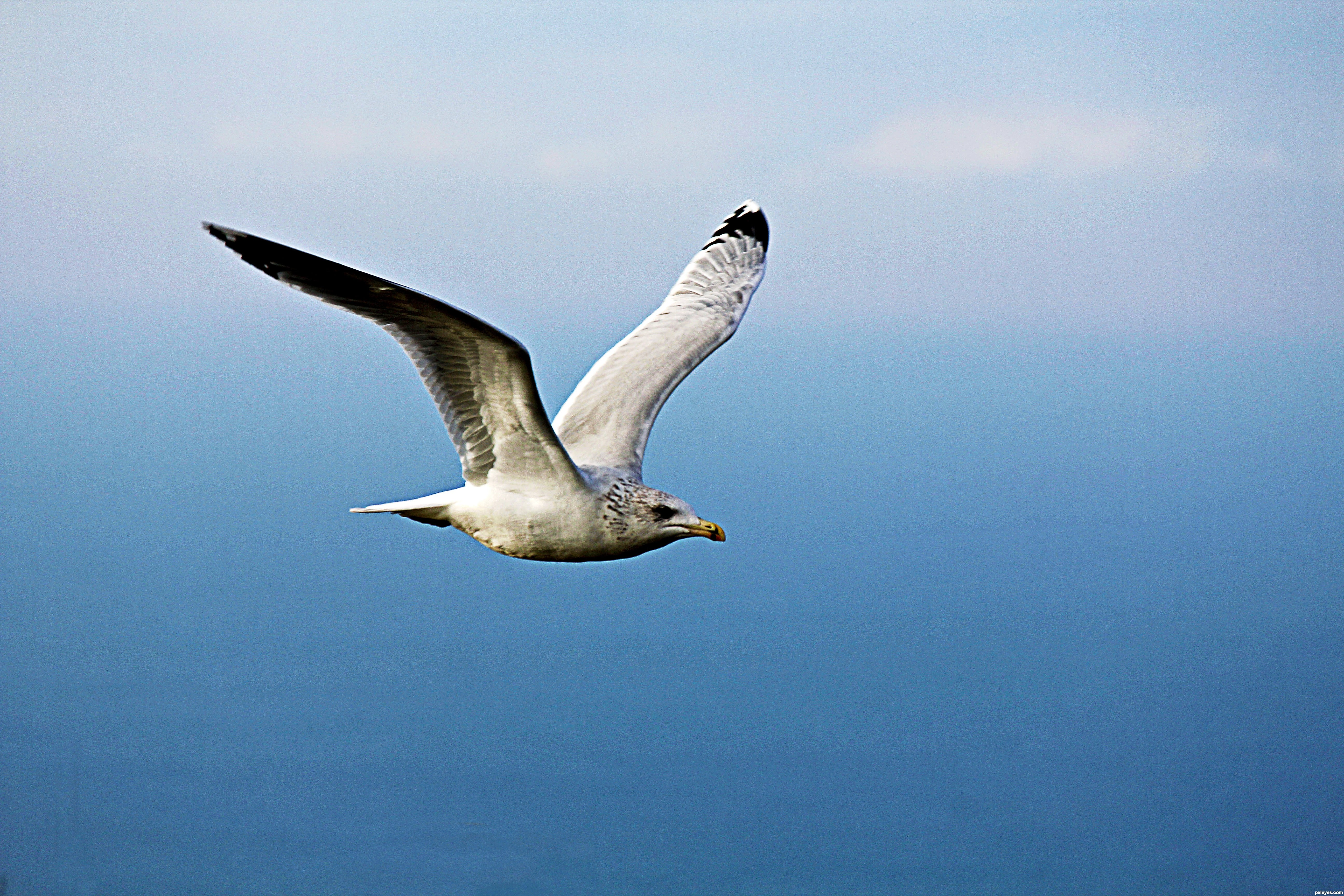 Bad Seagull picture, by qlmos7 for: bird flight photography contest ...