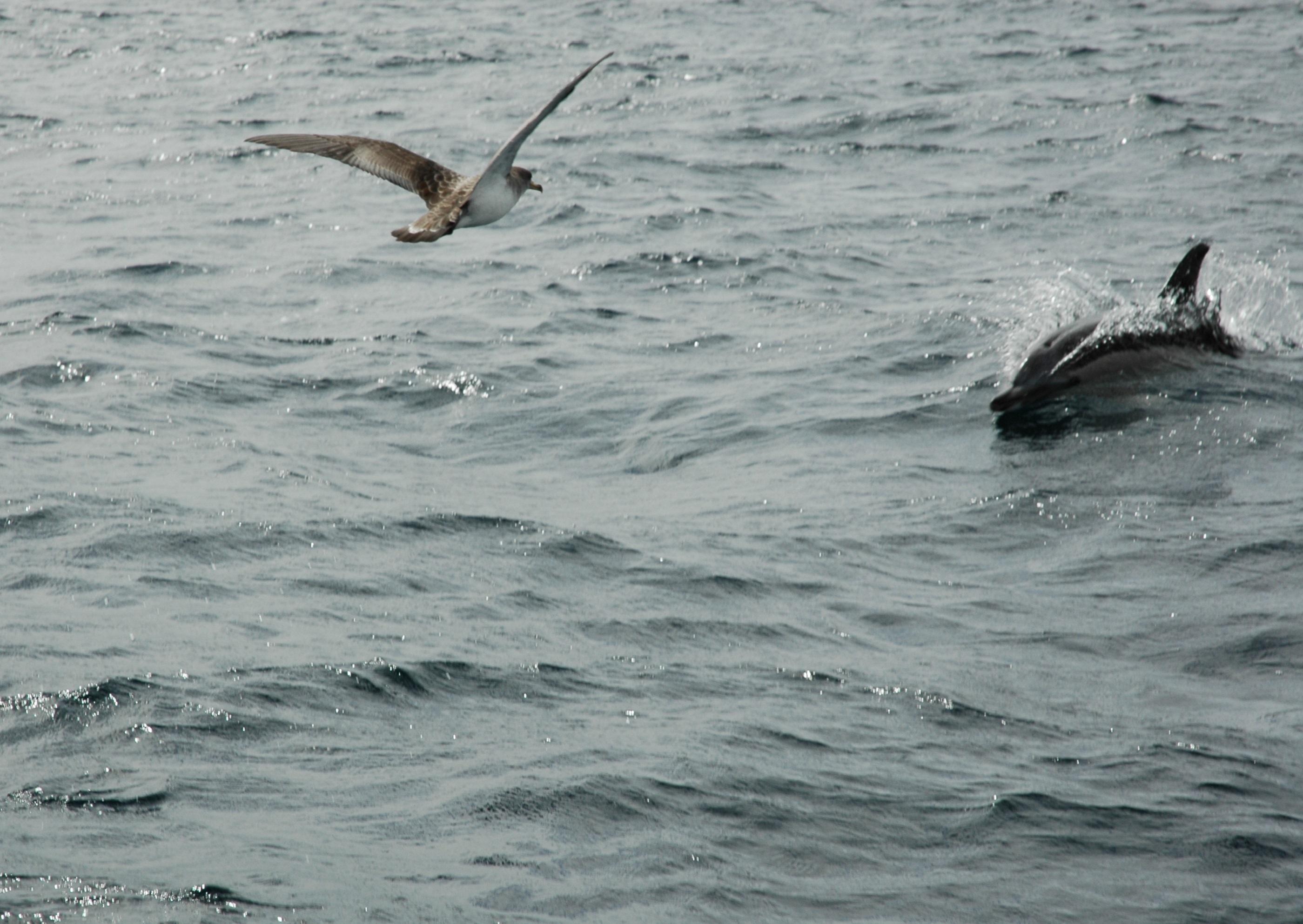 Seagull Flying, Animal, Bird, Fish, Gull, HQ Photo