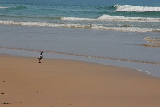 Seagull goes along the beach photo
